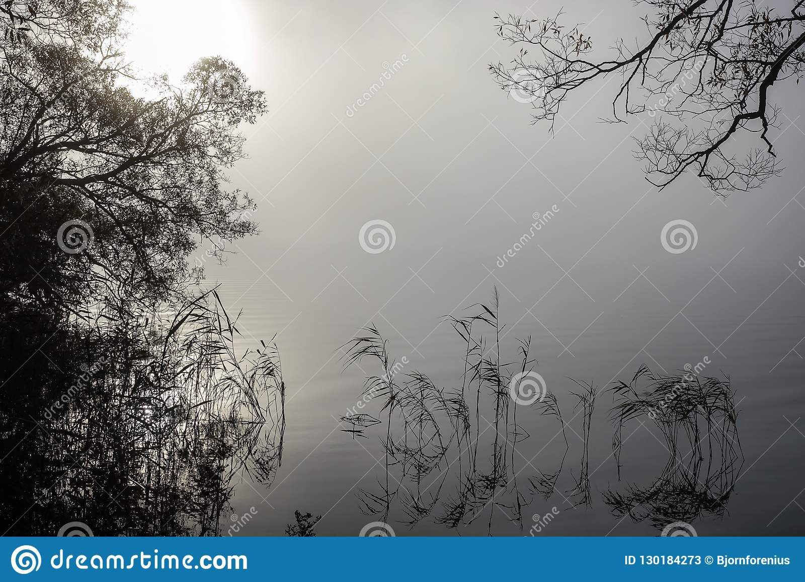 在有薄雾的风景的软的波纹 平安的大雾