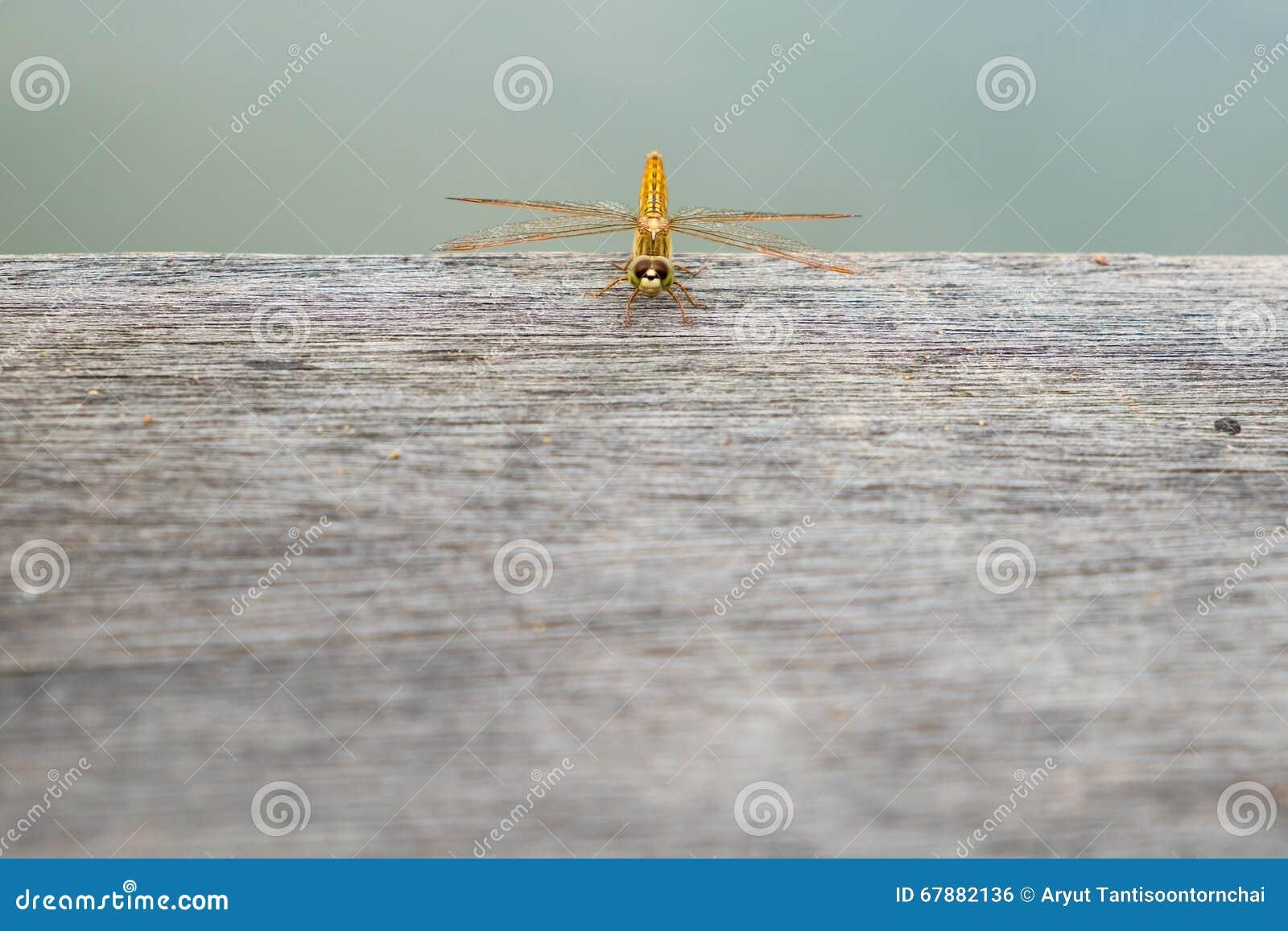 在木地板上的蜻蜓 顶视图