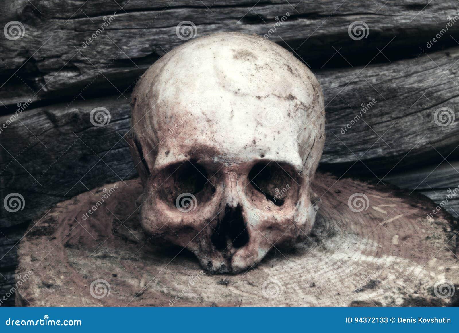 在木墙壁的背景的真正的人的头骨