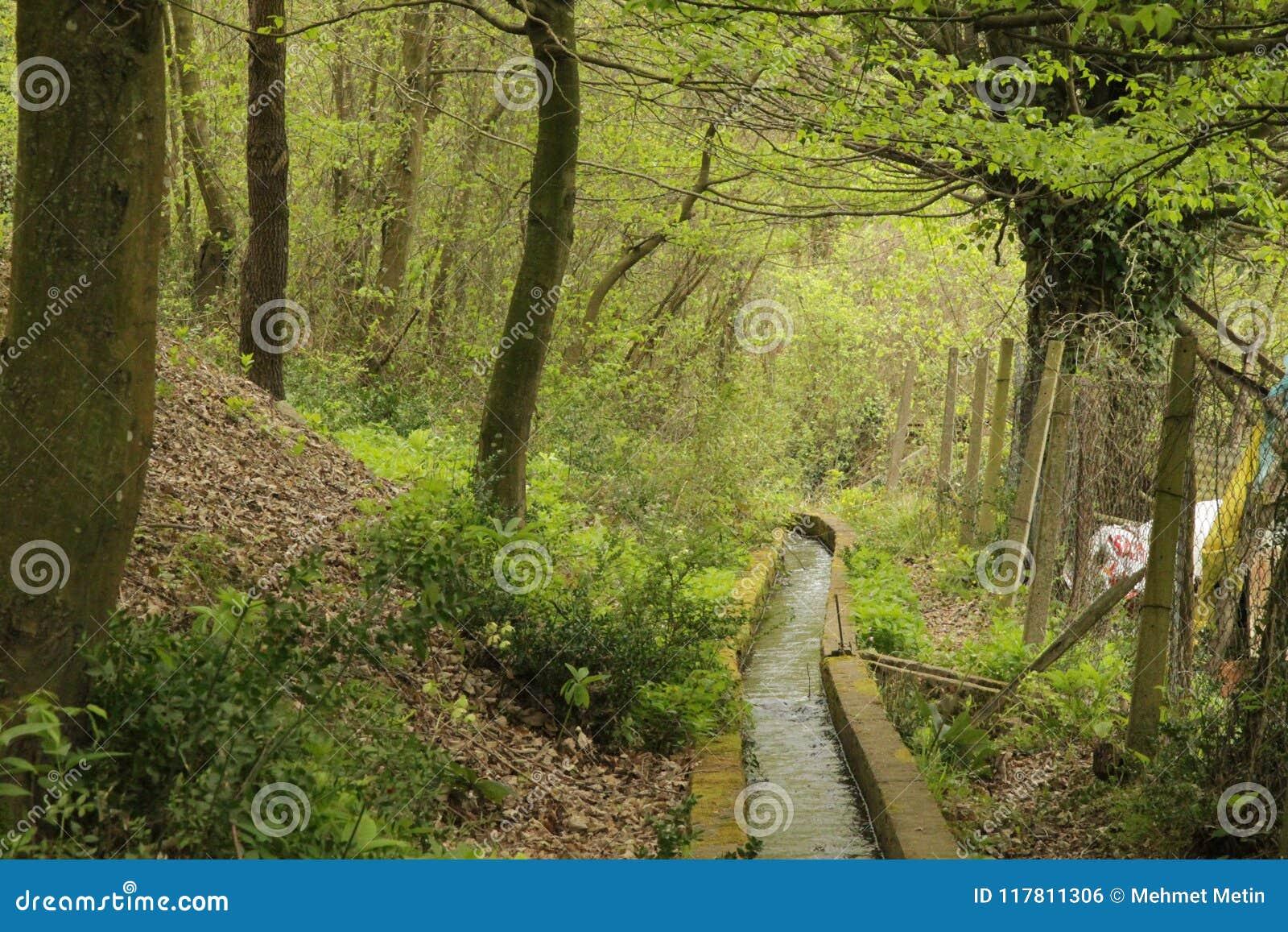 在木头的水道路