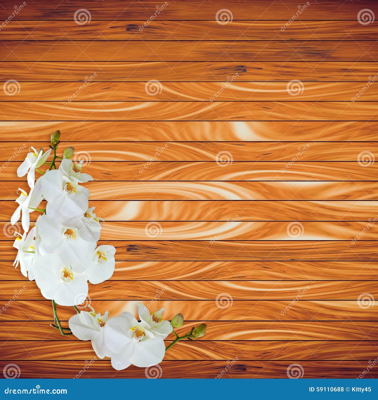 在木板条背景的白色兰花