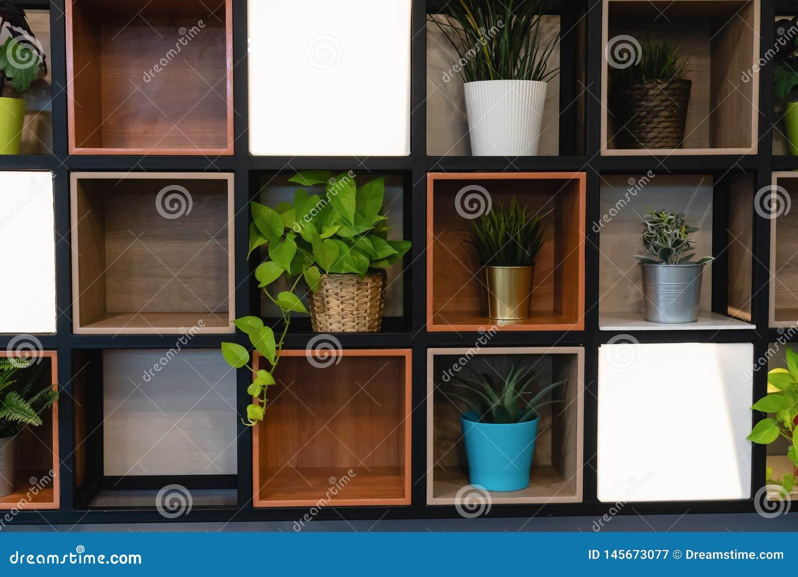 在木架子安置的植物罐附在墙壁