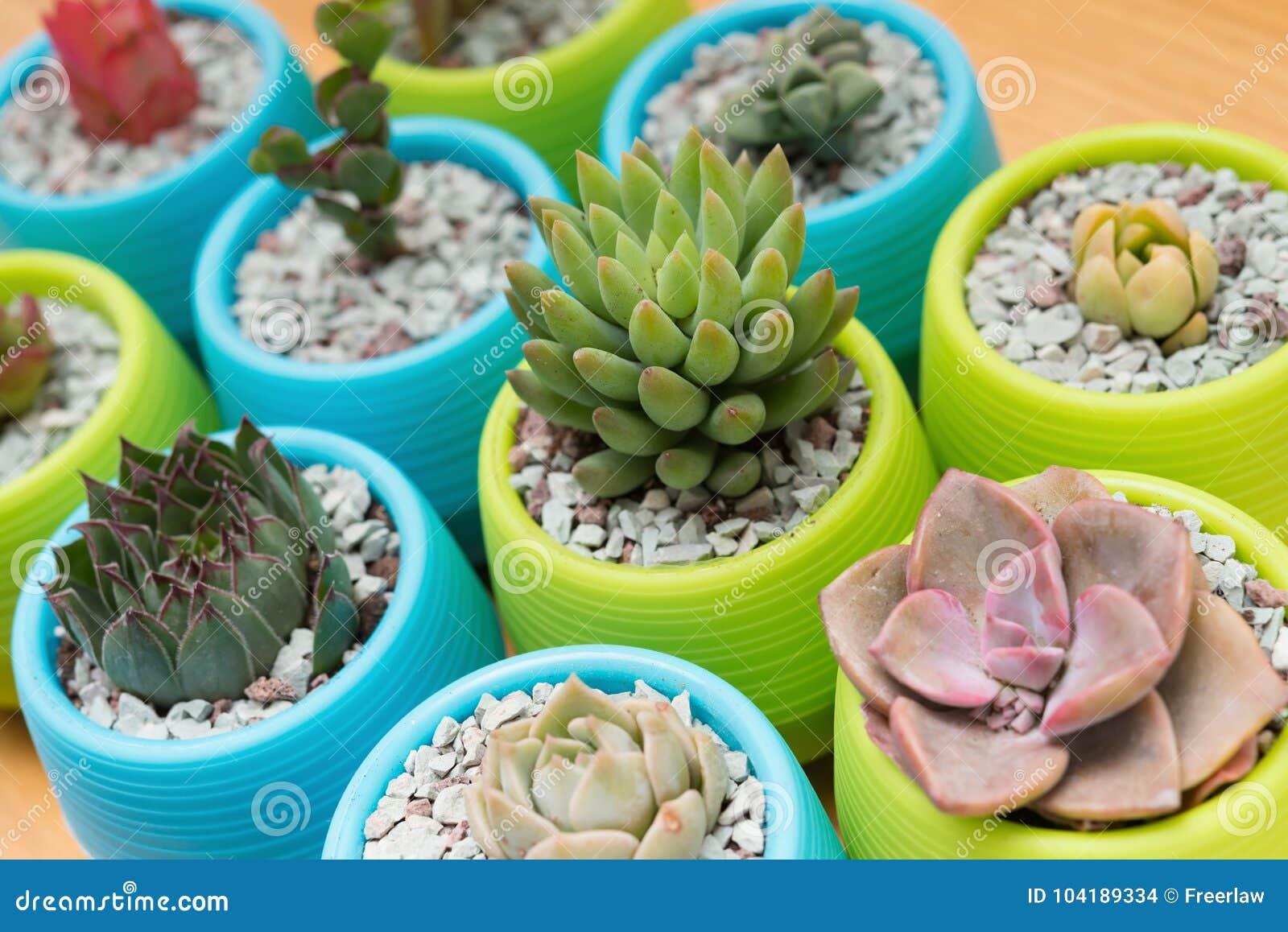 在木桌上的不同的多汁植物