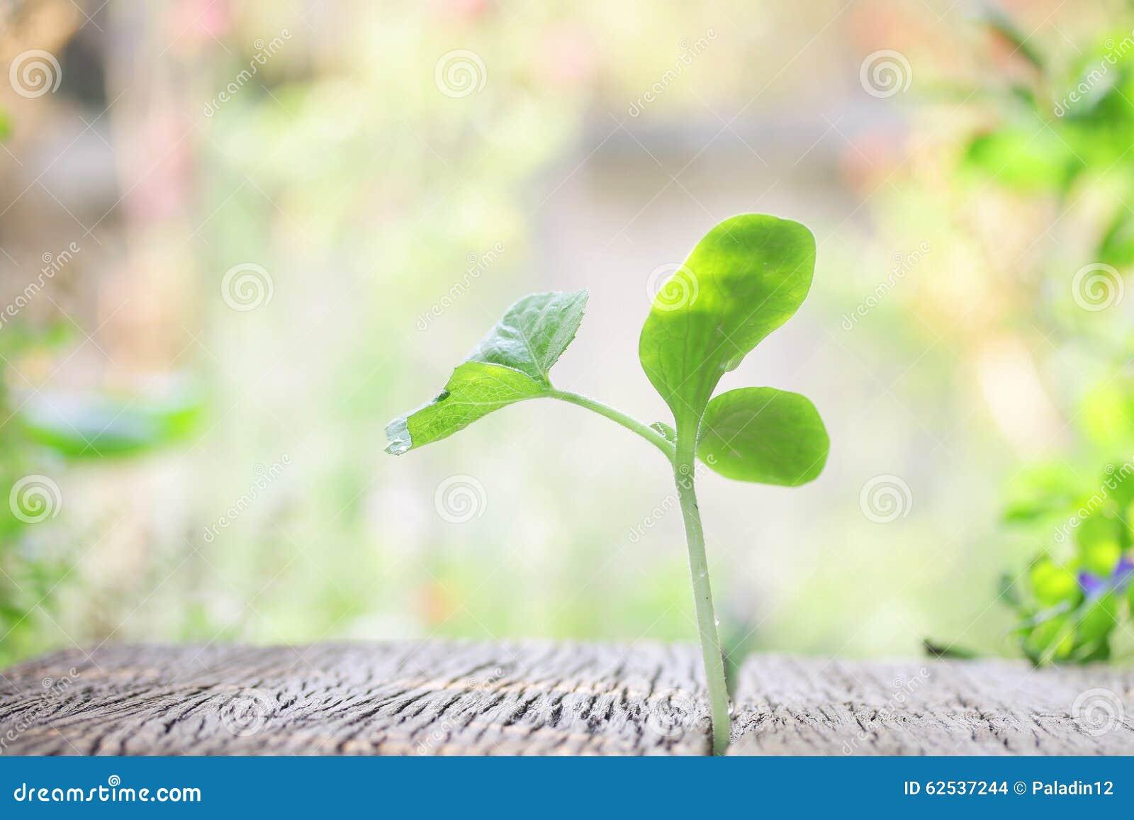 在木桌上的生长植物
