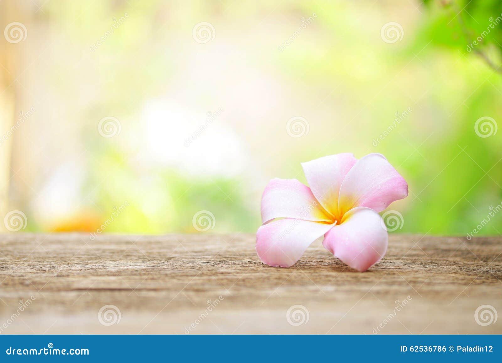 在木桌上的赤素馨花花