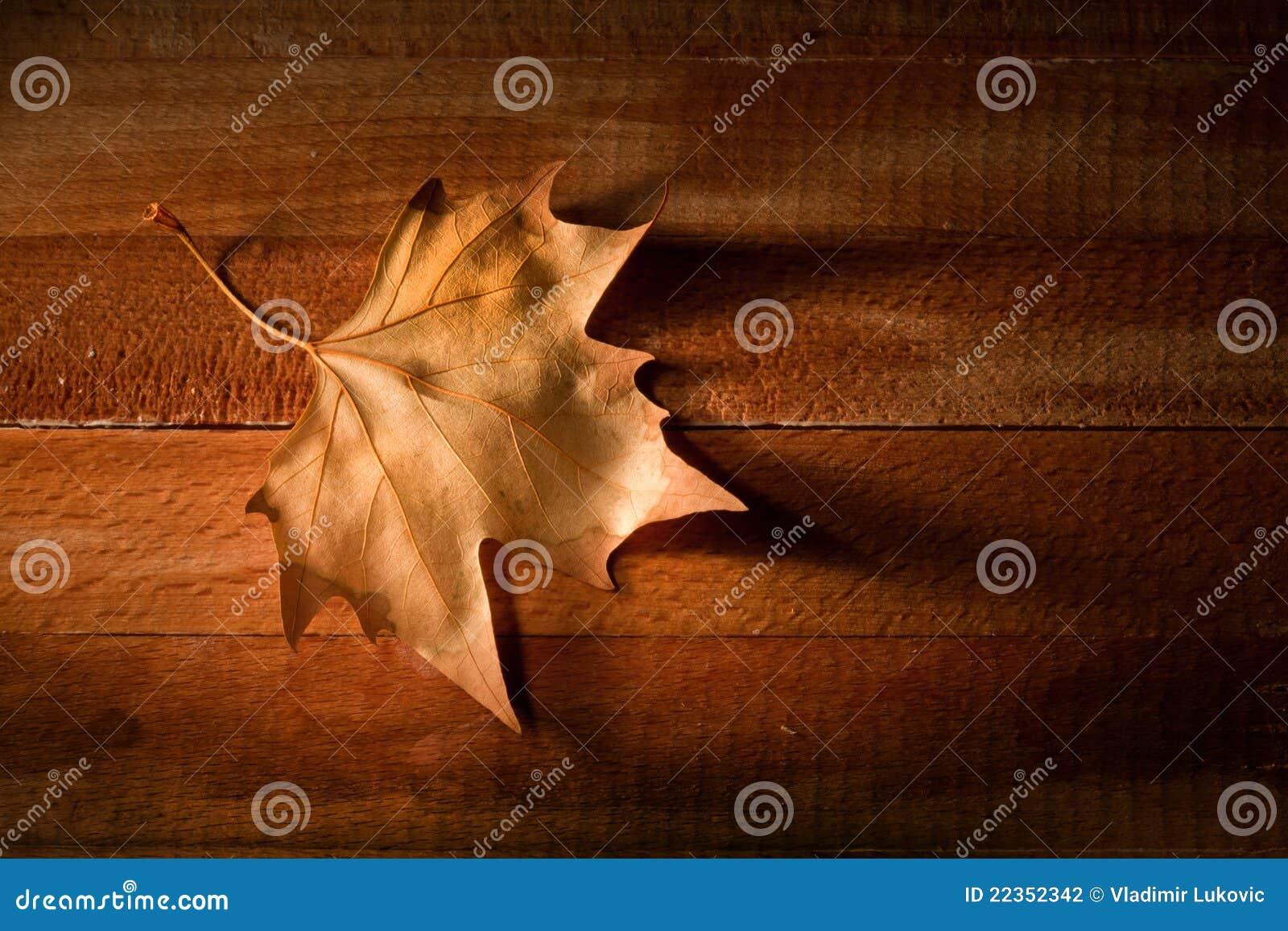 在木的背景叶子