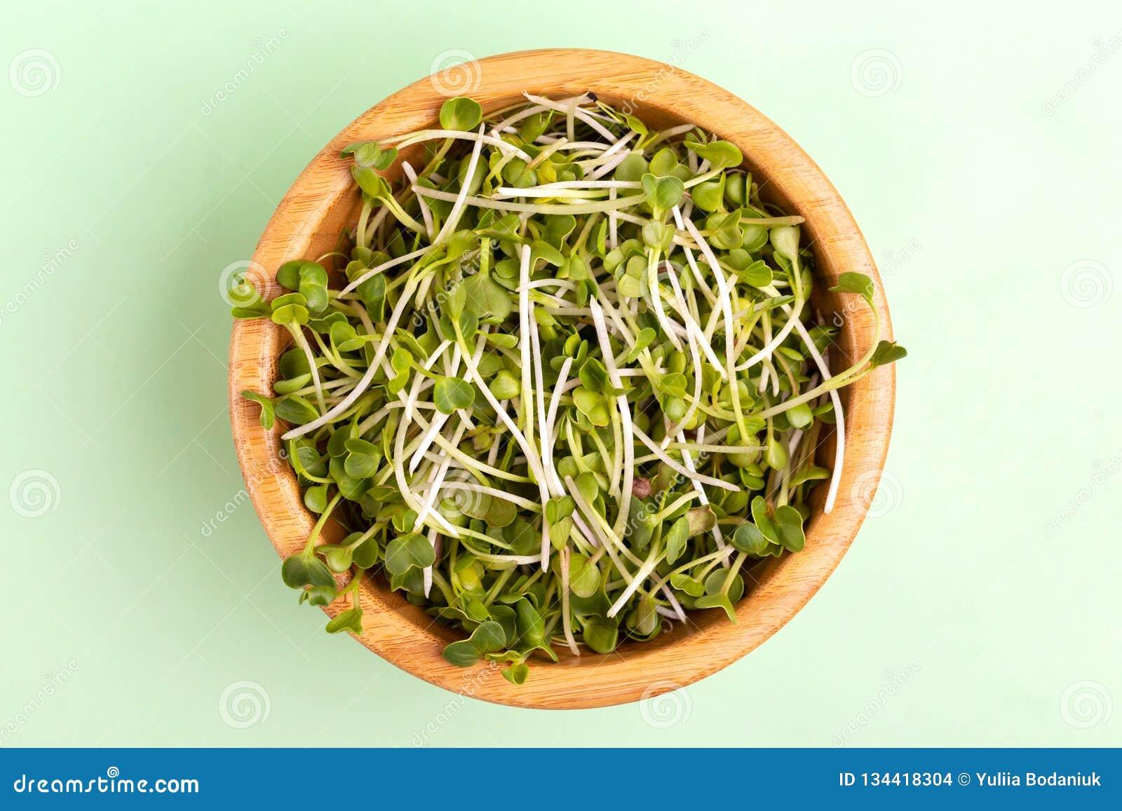 在木碗的发芽的萝卜新芽在浅绿色的背景