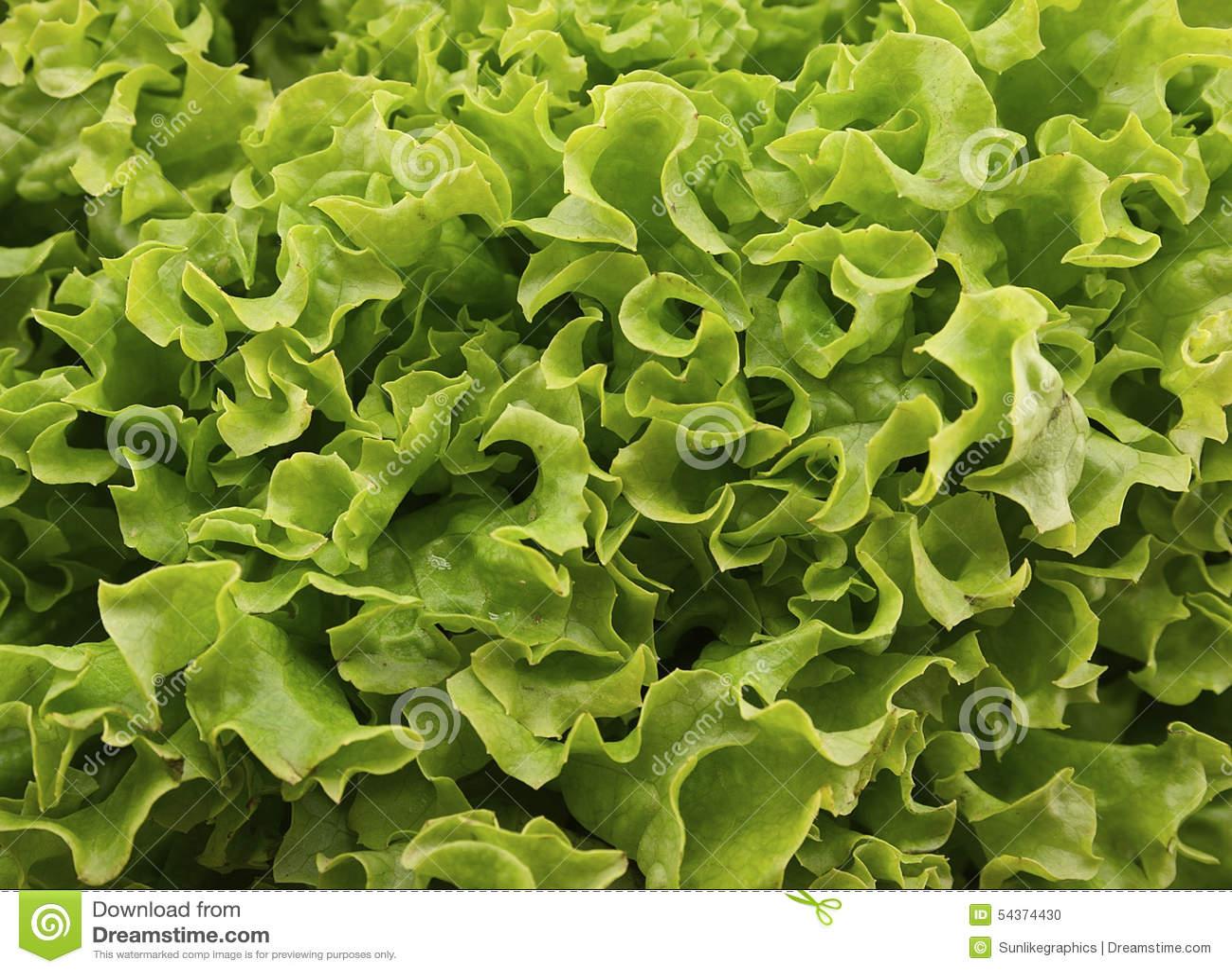 在木背景的新绿色莴苣salat 健康的食物