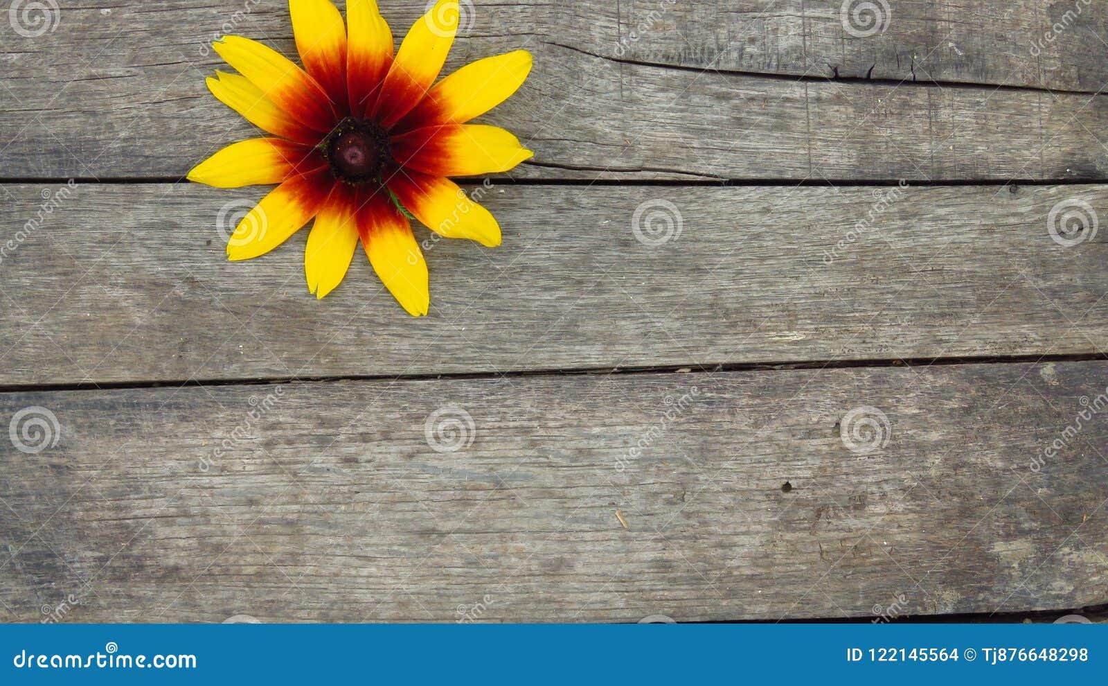 在木背景的美丽的黄色花