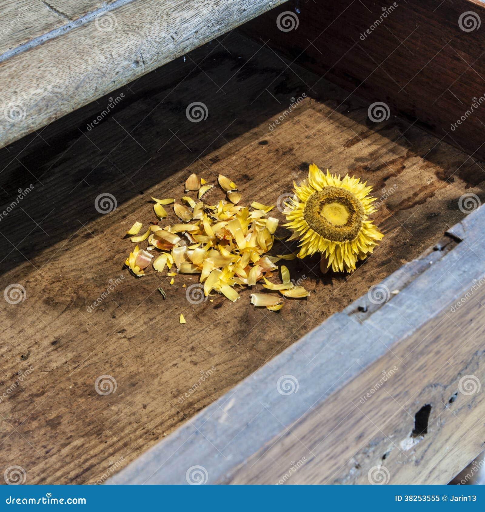 在木背景的老向日葵