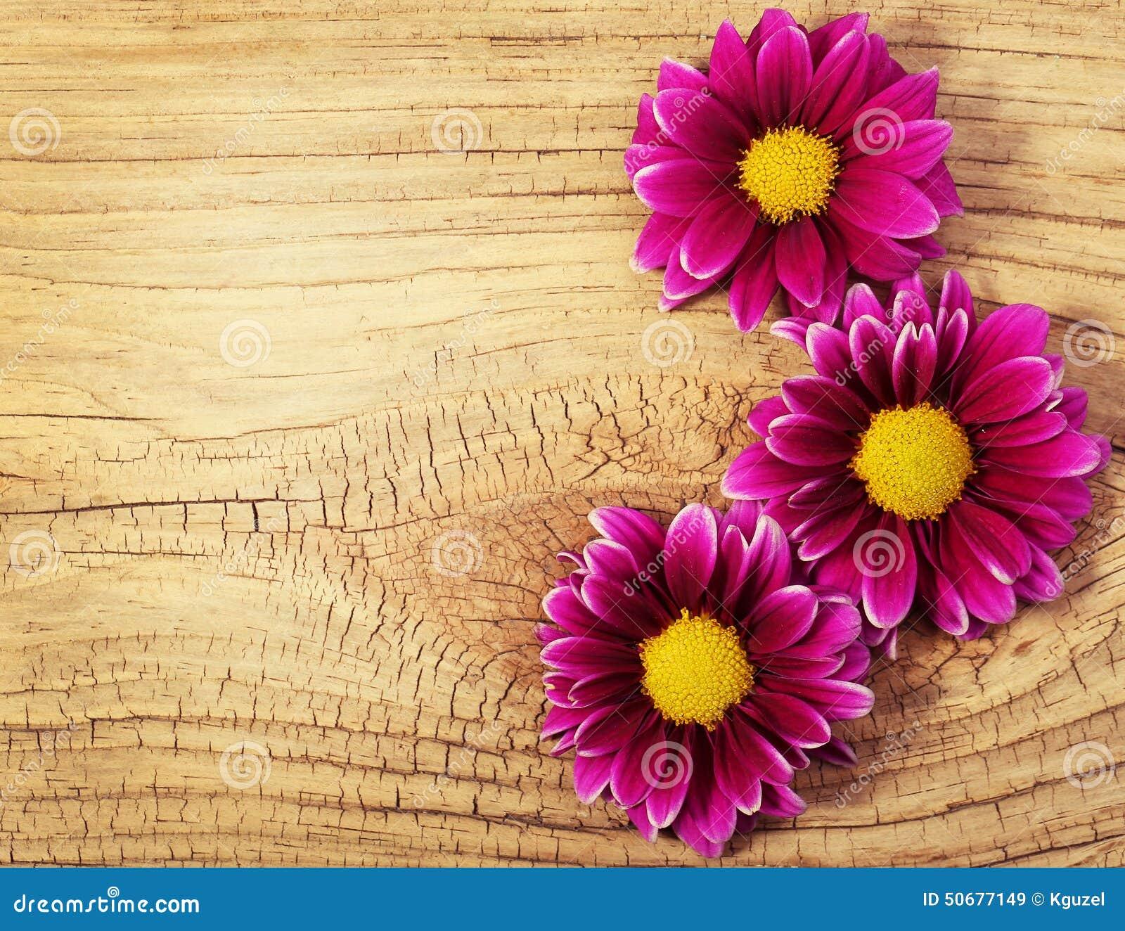 Download 在木背景的洋红色菊花花 库存图片. 图片 包括有 黄色, 开花的, 没人, 工厂, 伯根地酒, 开花, 生气勃勃 - 50677149