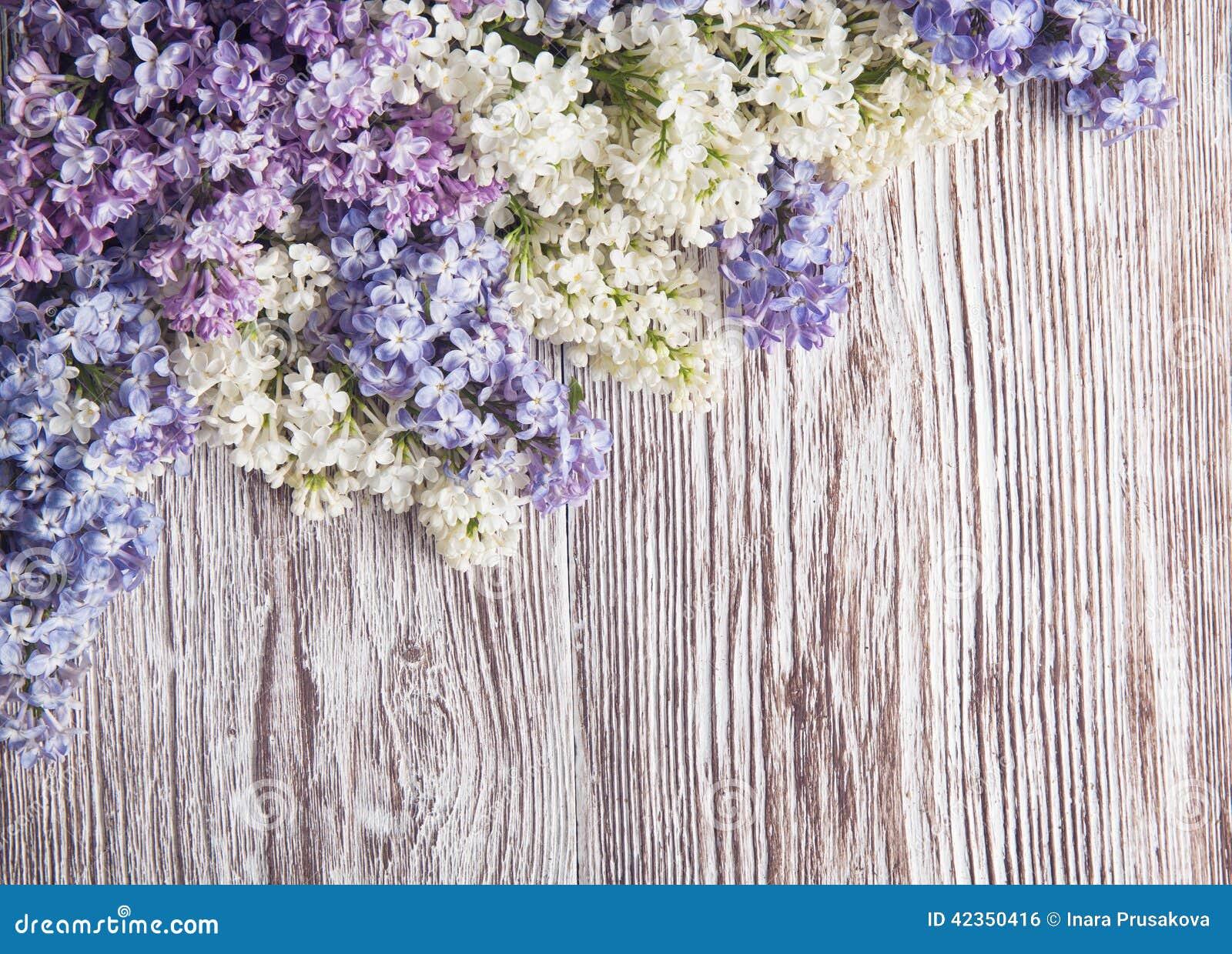 在木背景,在葡萄酒木头的开花分支的淡紫色花