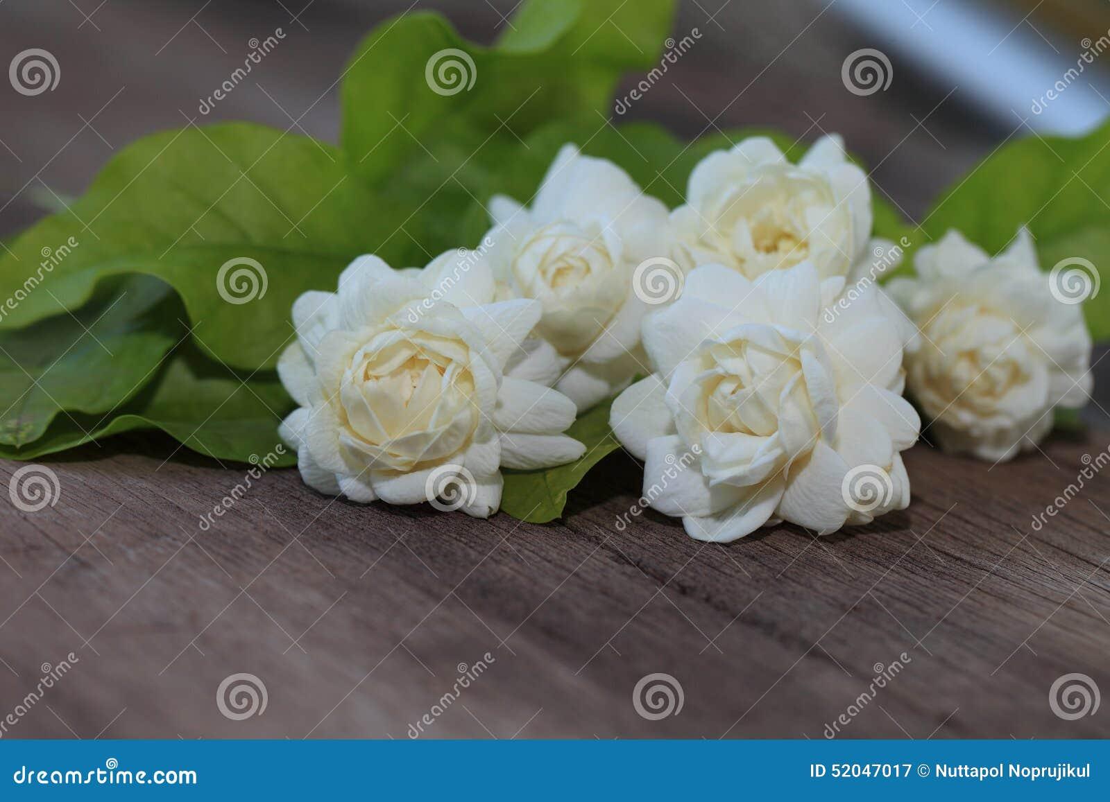 在木头的热带茉莉花花 茉莉花花和叶子在增殖比