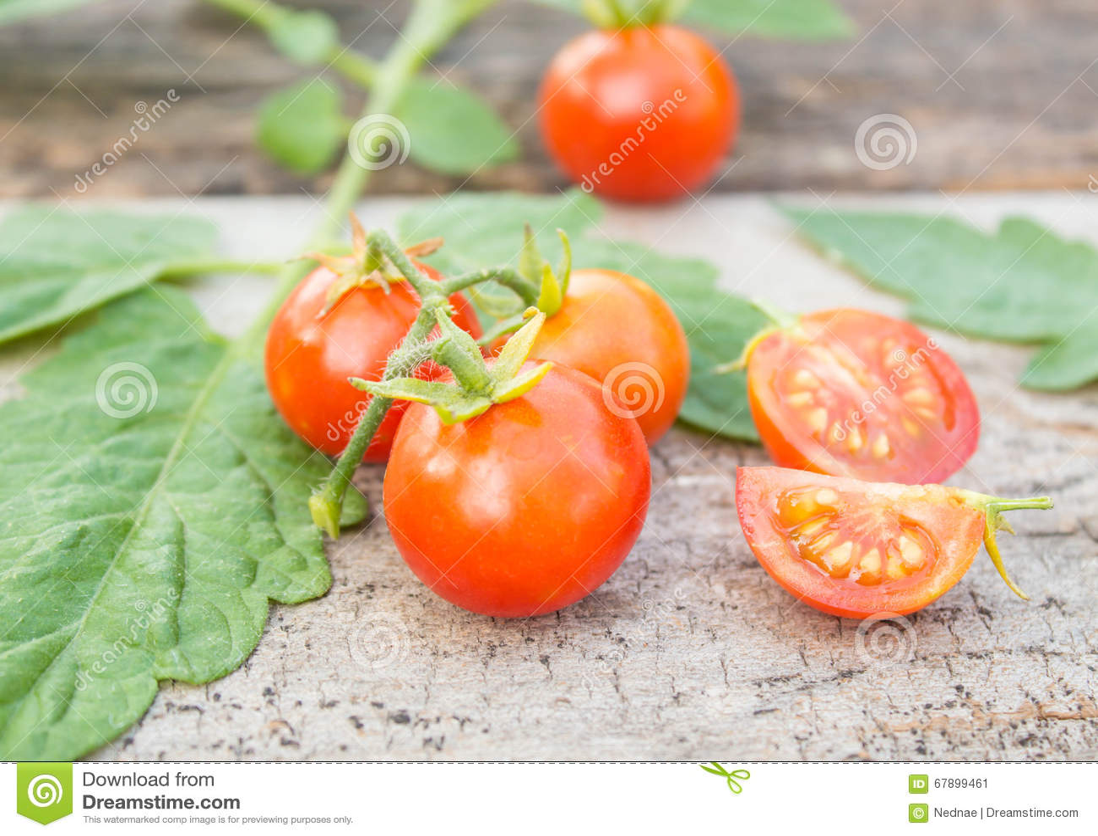 在木头的蕃茄