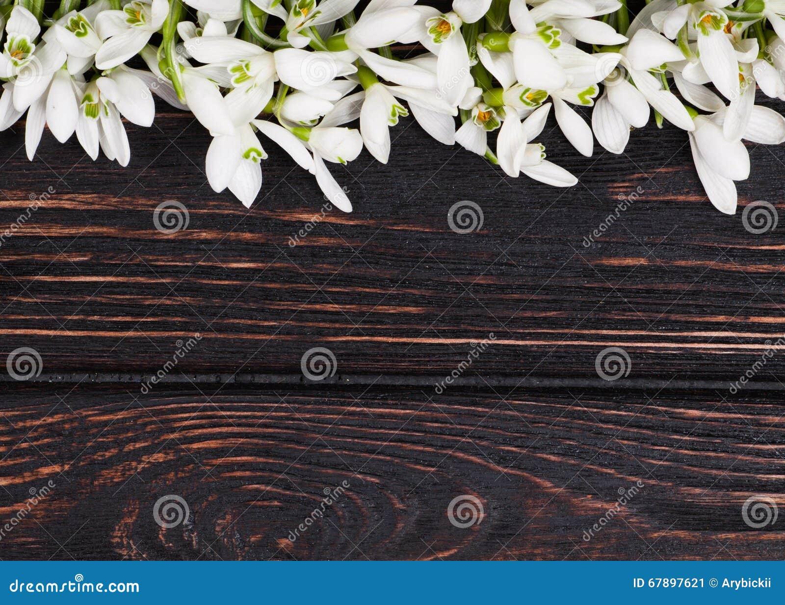 在木头的Snowdrops束