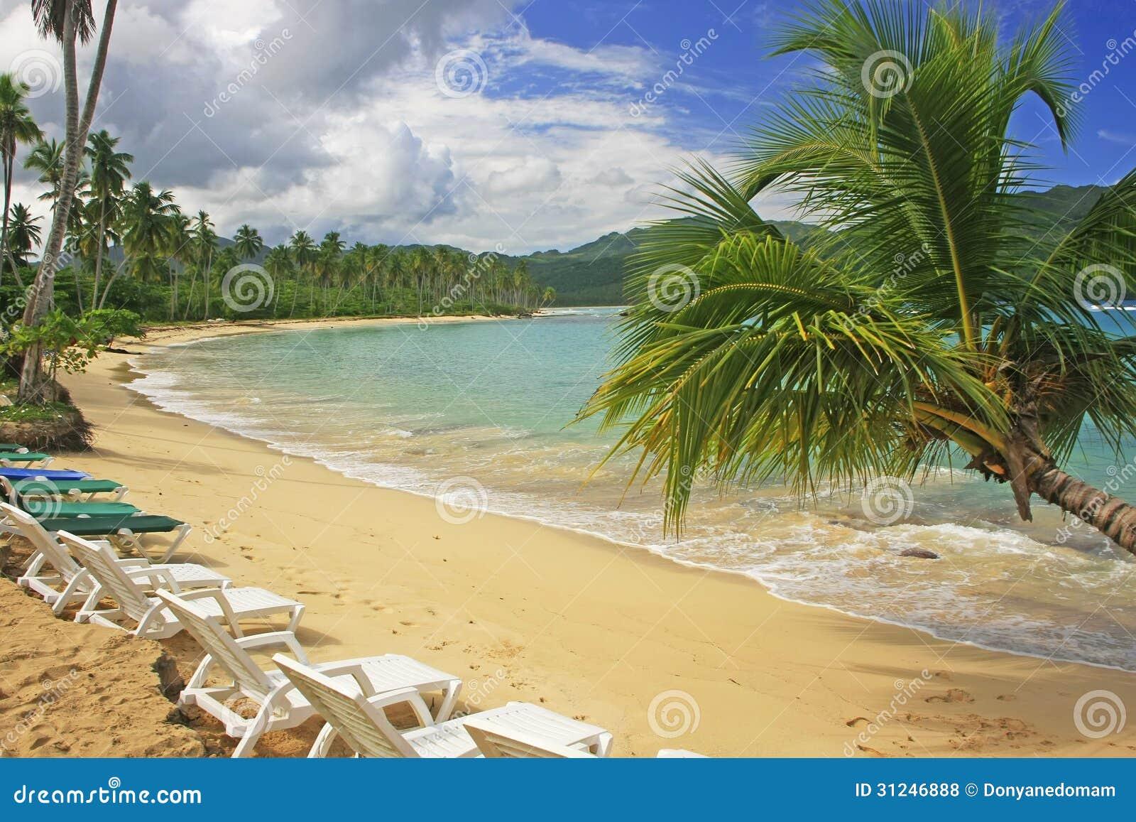 在林孔海滩, Samana半岛的倾斜的棕榈树