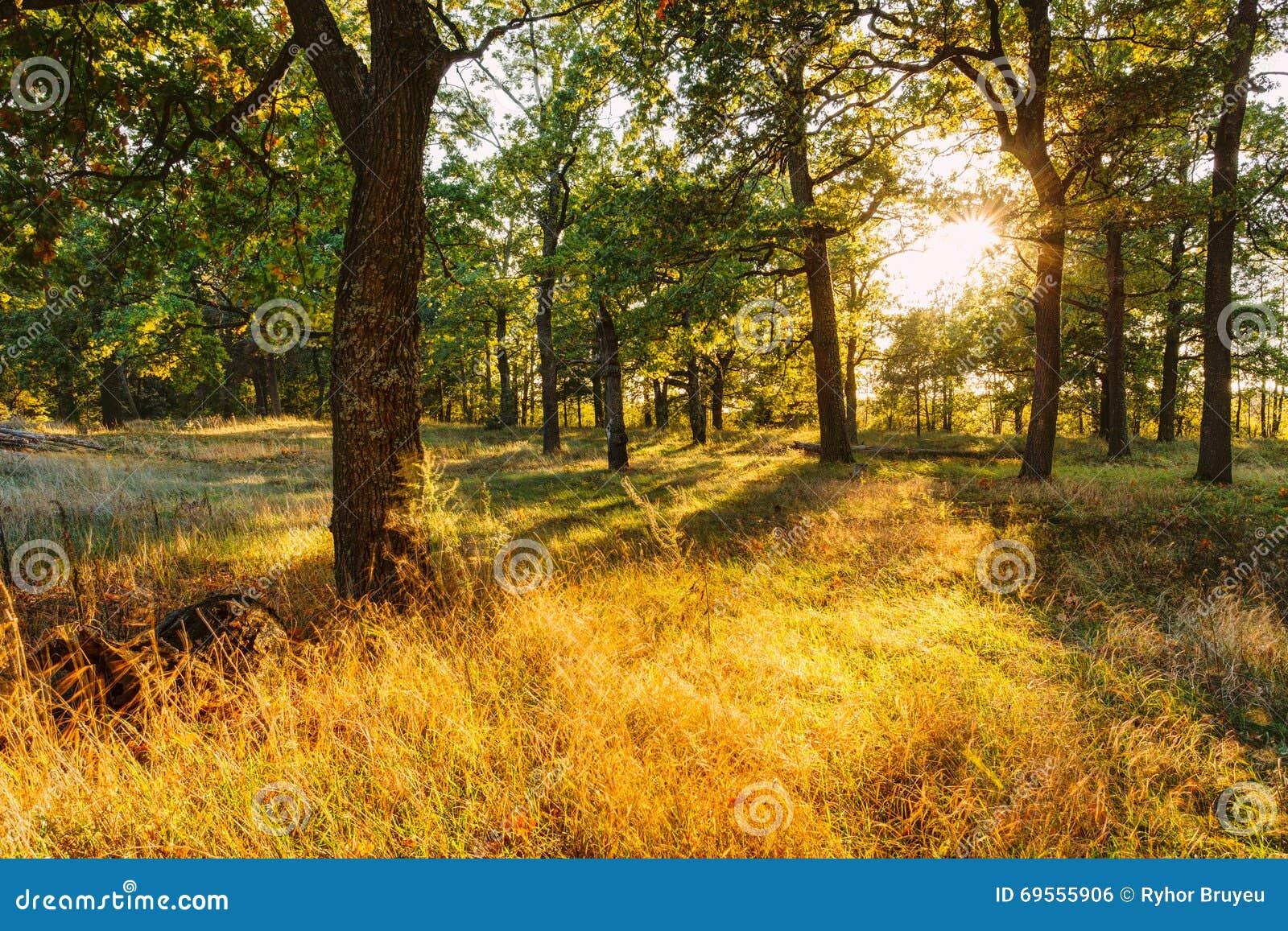 自然阳光减肥 效果图