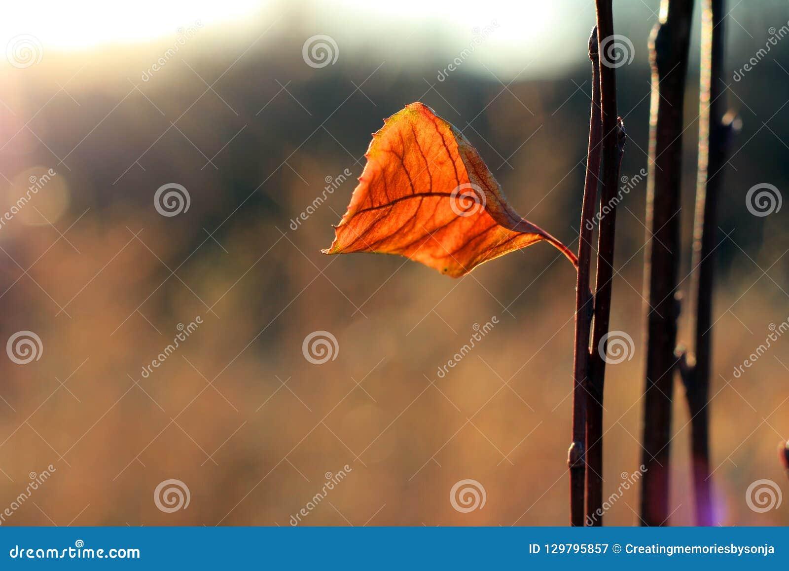 在枝杈的一片叶子