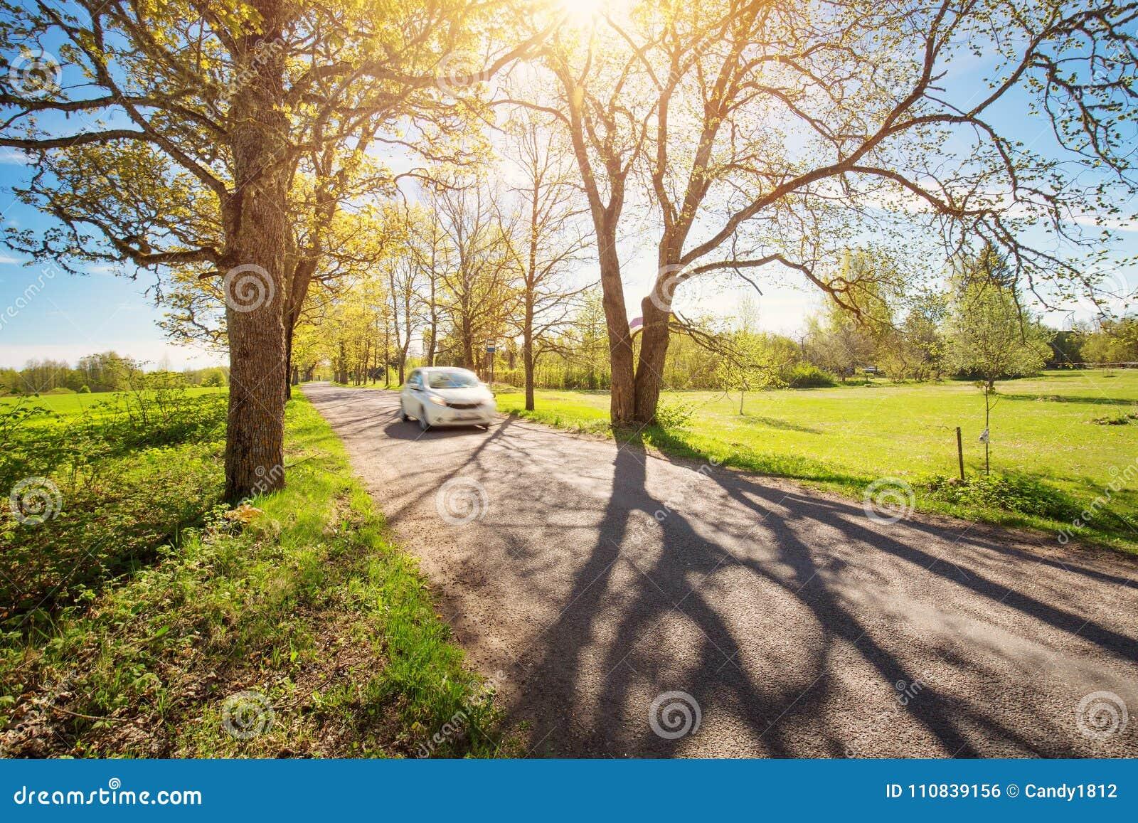 在柏油路的汽车在春天