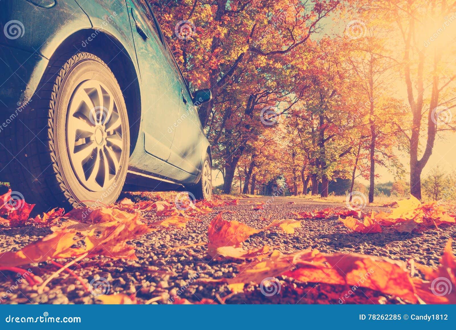 在柏油路的汽车在秋天