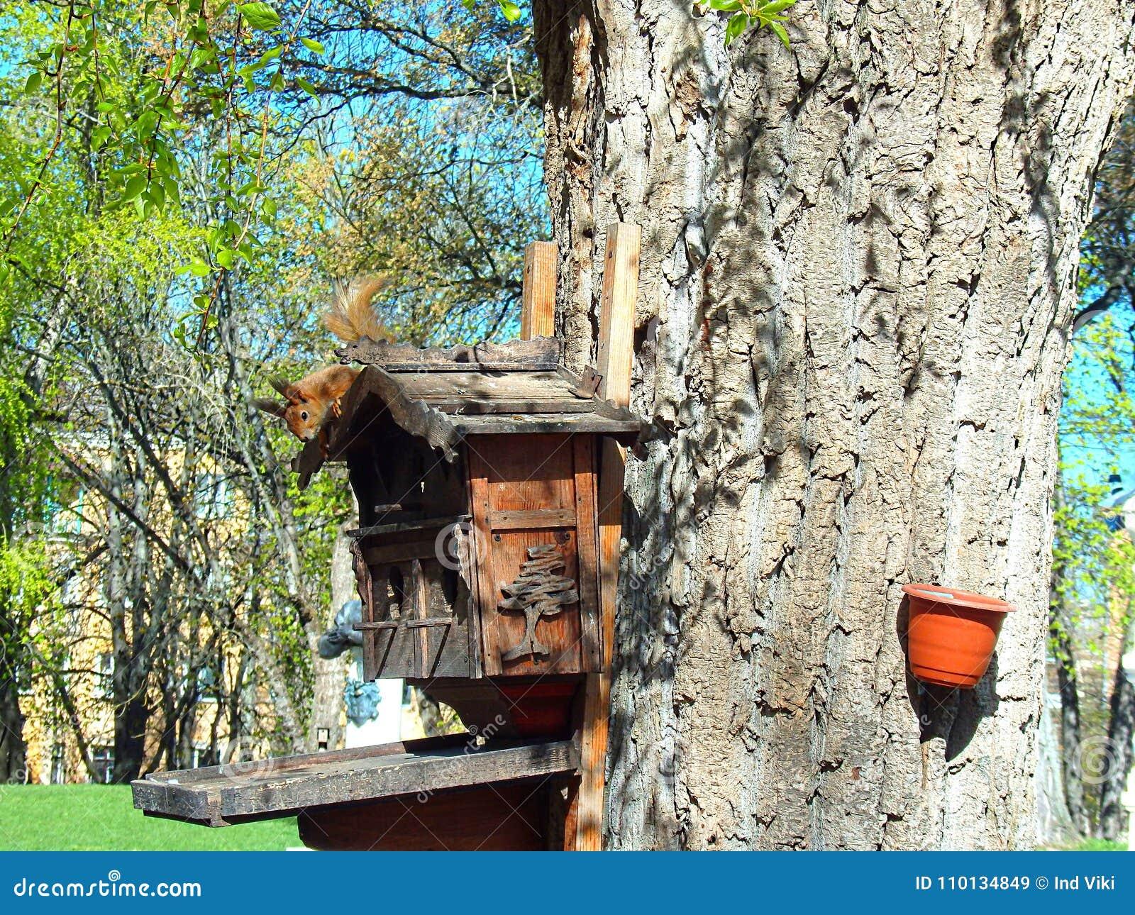 在树上小屋的蛋白质