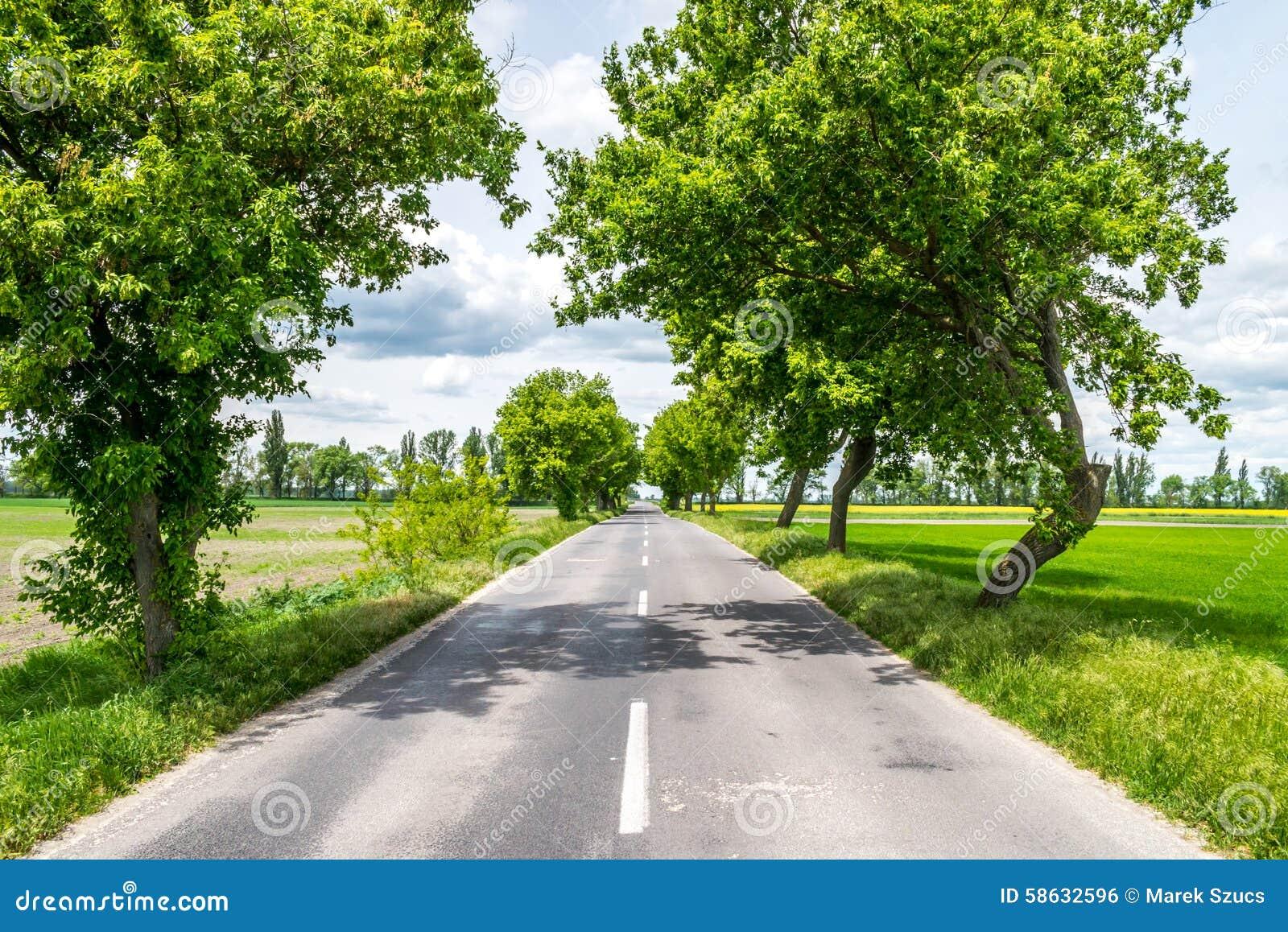 在树之间的乡下路