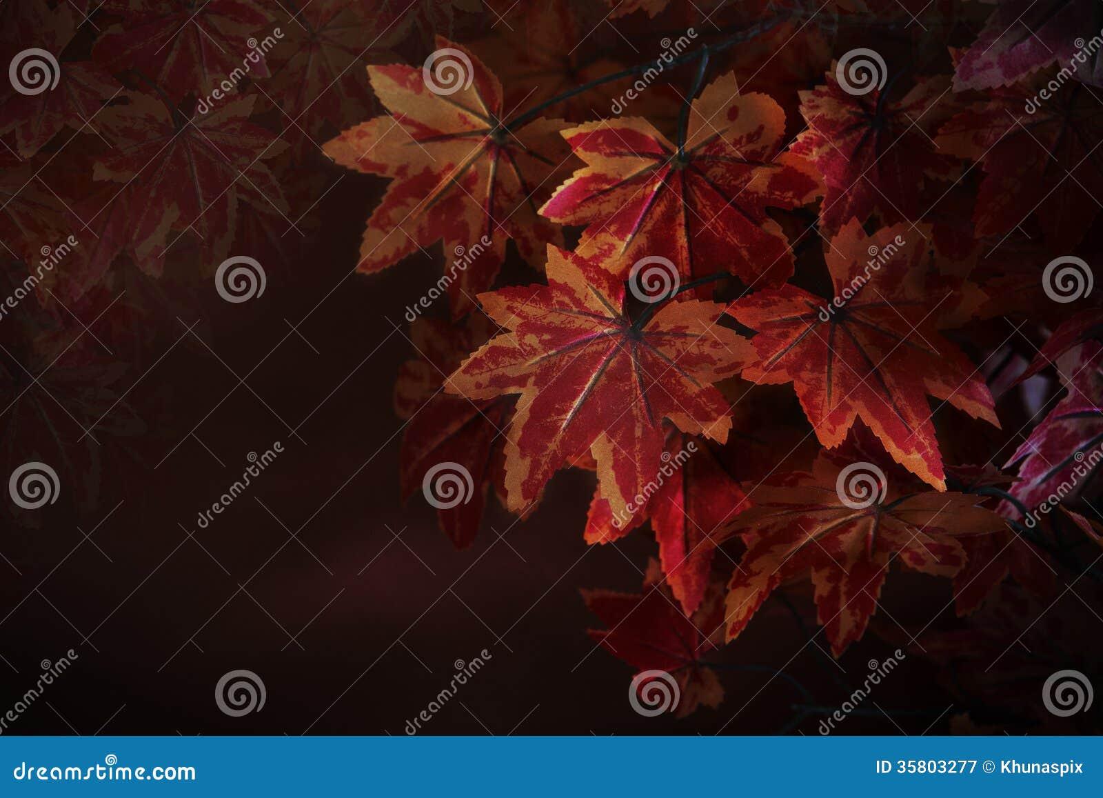 在树枝的红槭叶子与作为自然冬天秋天秋天背景的红色模糊的背景用途或背景和multipurpo