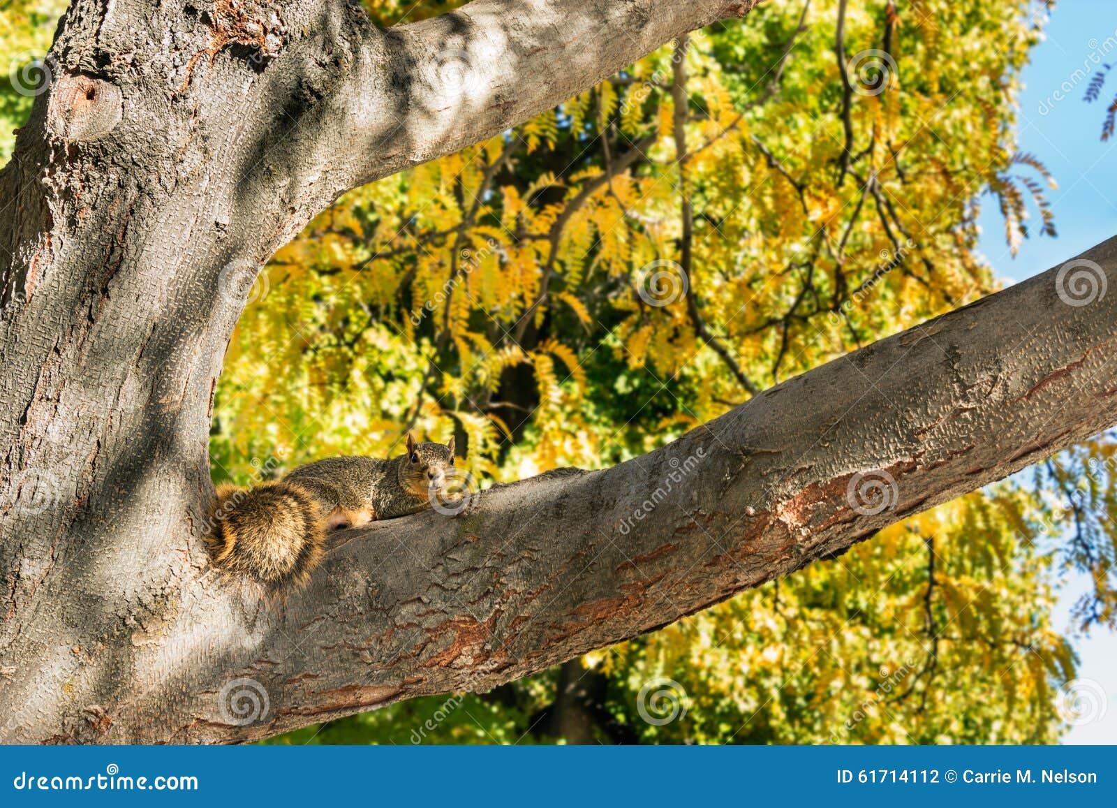 在树的灰鼠在秋天期间