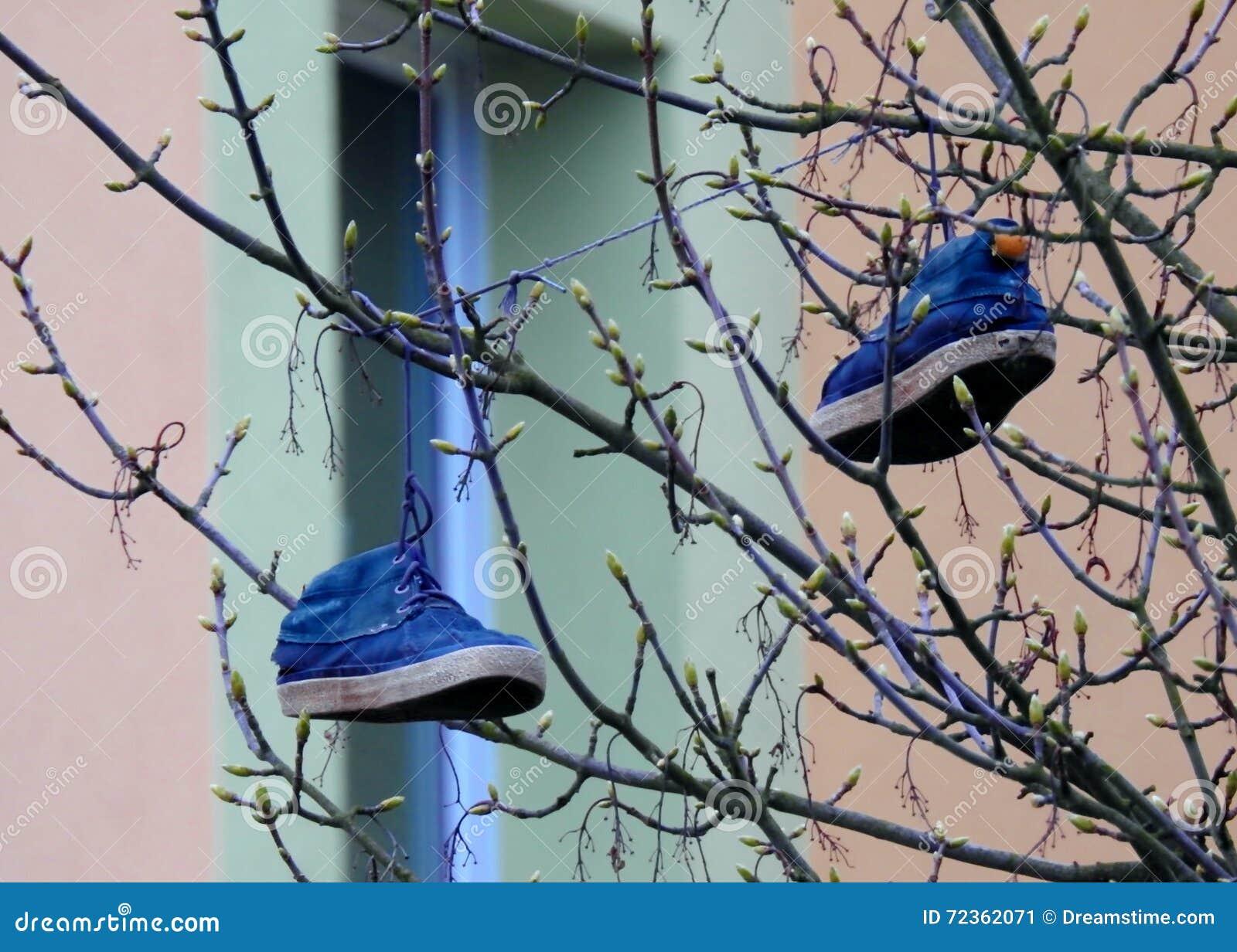 在树的鞋子