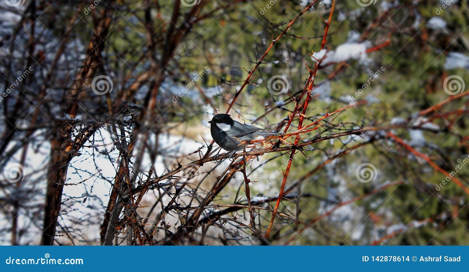 在树的鸟,自然,比什凯克,吉尔吉斯斯坦,春天