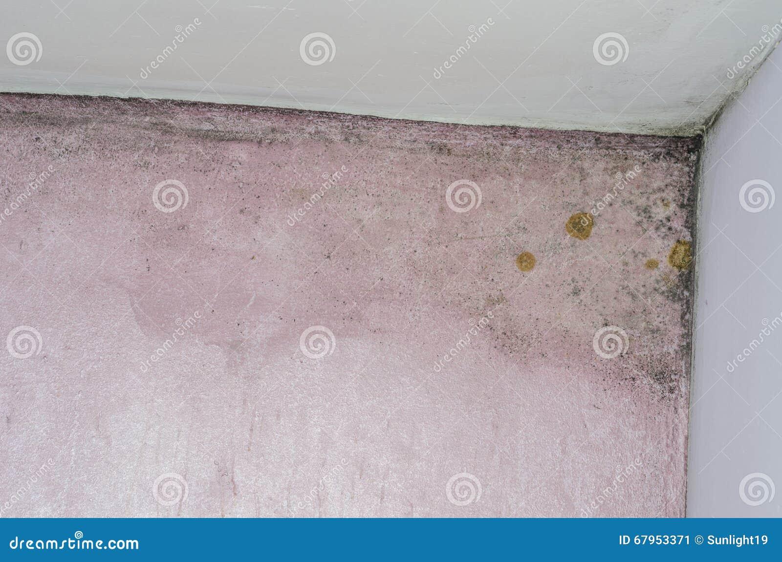 在桃红色墙壁上的模子和湿气积累