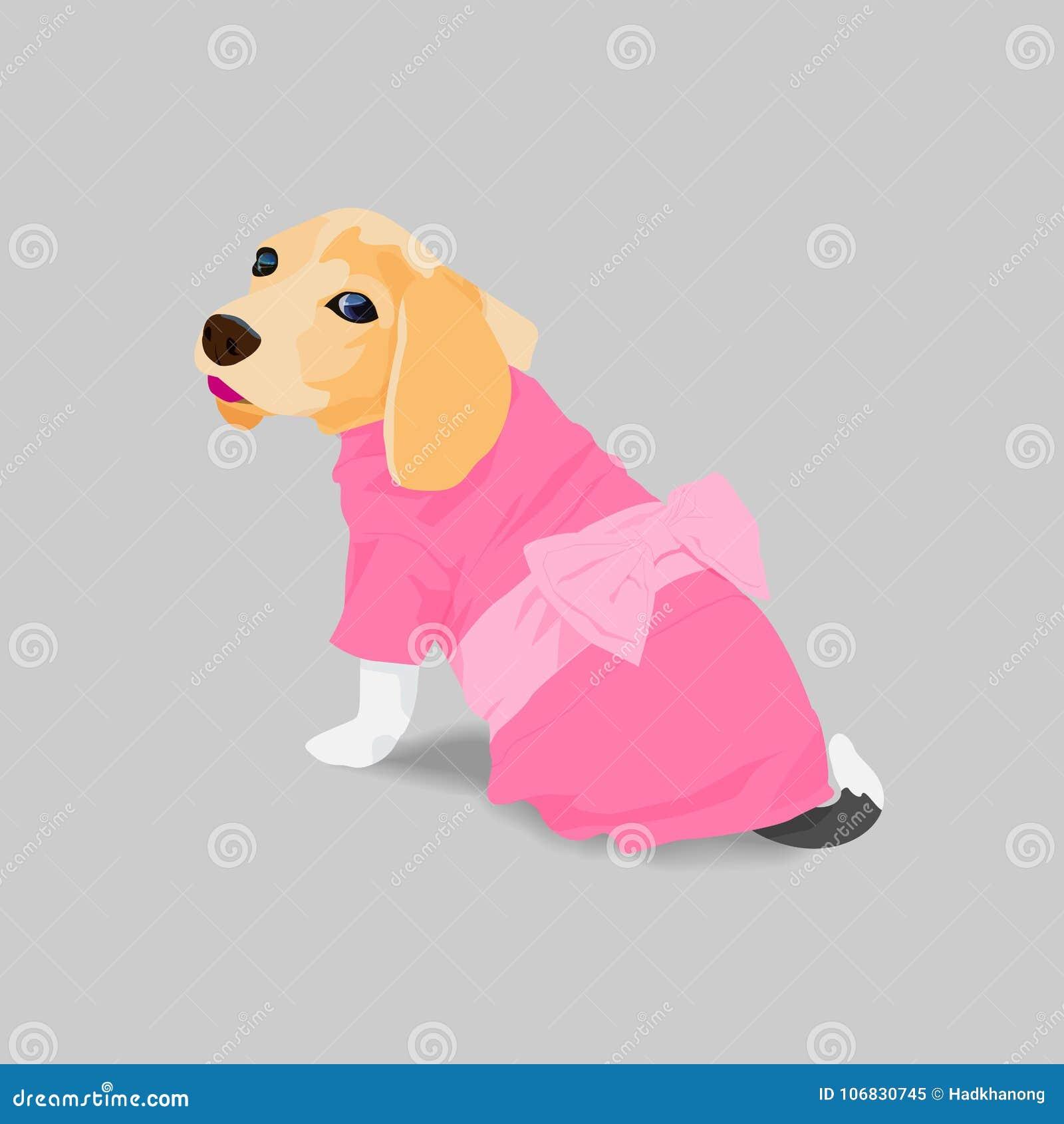 在桃红色礼服的可爱的小猎犬