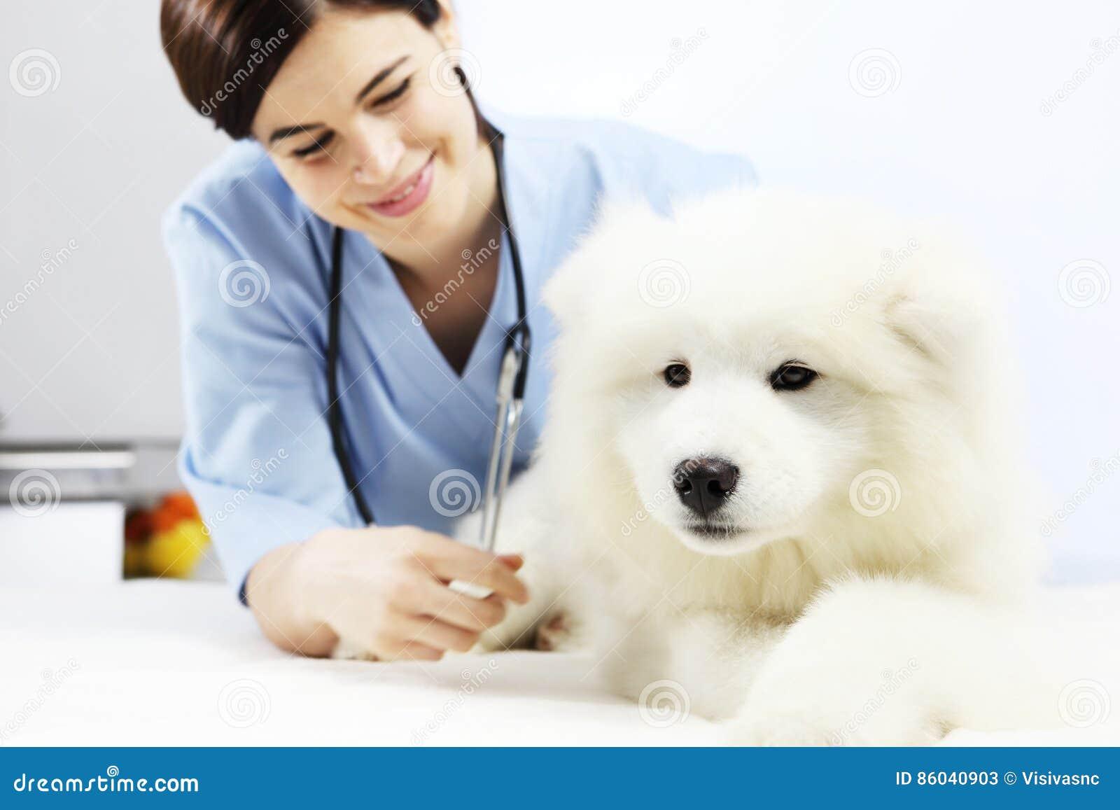 在桌上的微笑的兽医审查的狗在狩医诊所