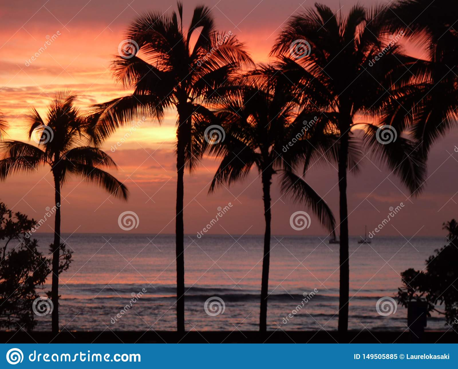 在棕榈树的完美