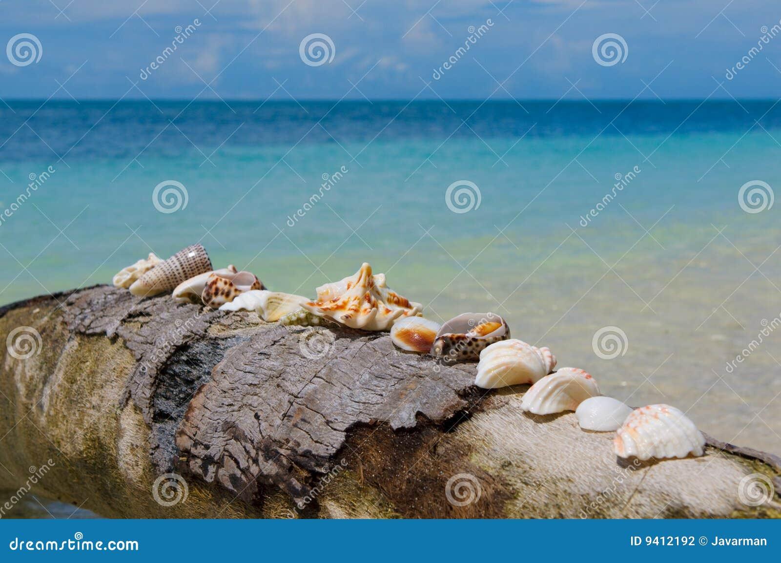 在棕榈树,理想的节假日背景的壳