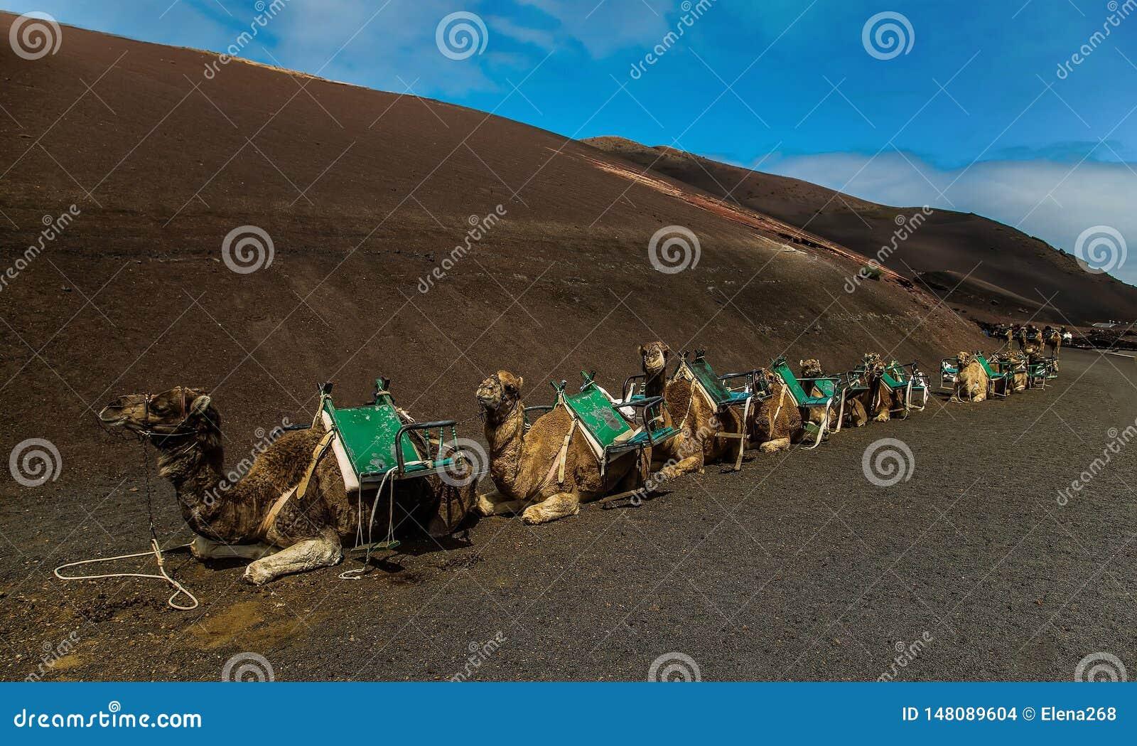 在棕色沙子的Smal有蓬卡车