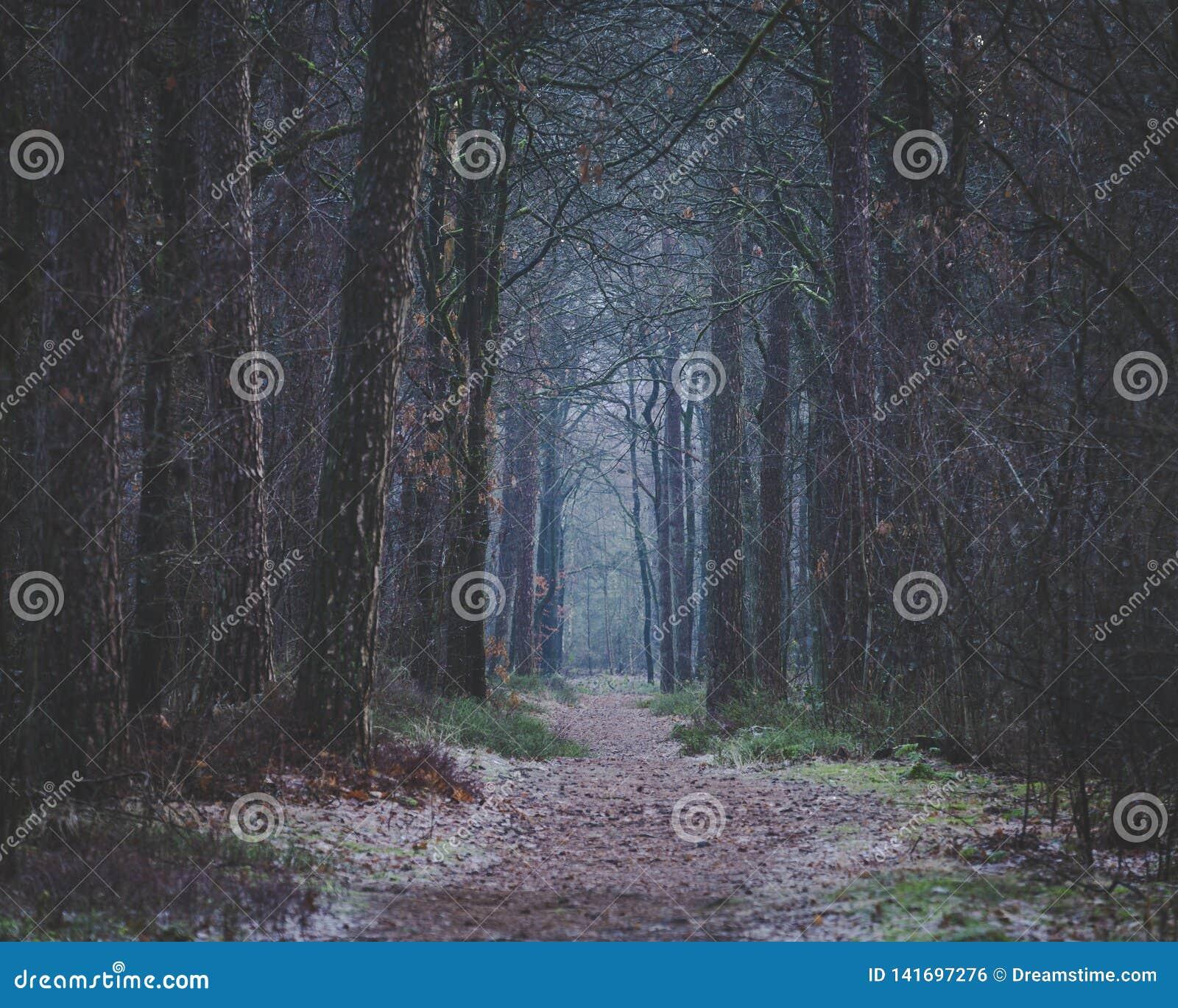 在森林前面道路黑暗的清早步行