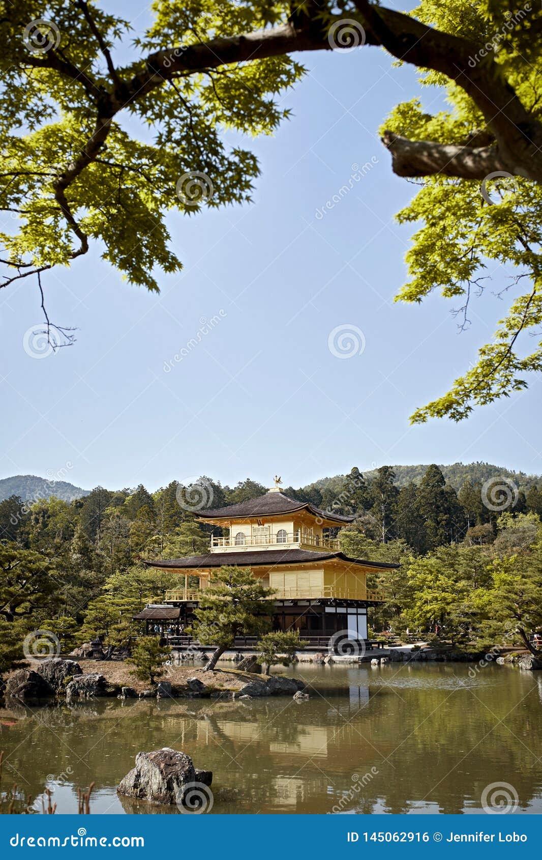 在森林围拢的鹿苑寺寺庙的清楚的天空蔚蓝