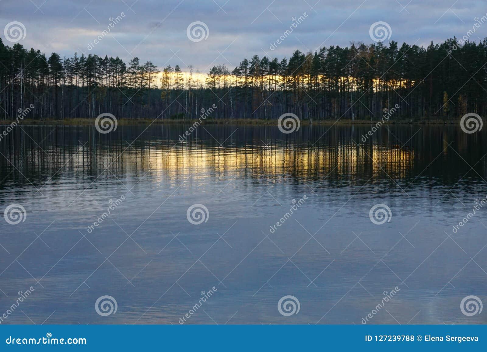 在森林湖的日落
