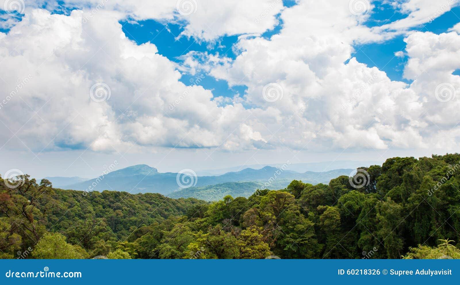 哹�-yol_天空森林哹n分享展示
