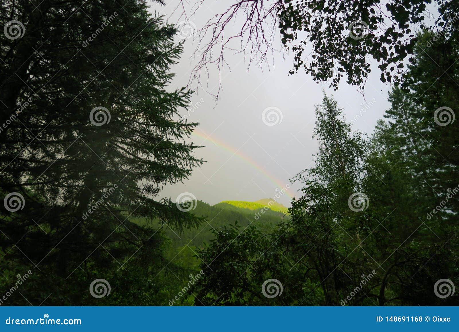 在森林的彩虹