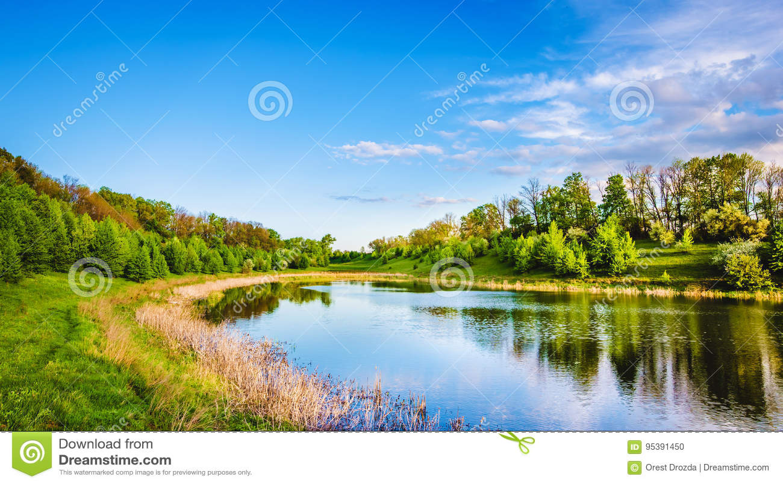 在森林附近的Summer湖