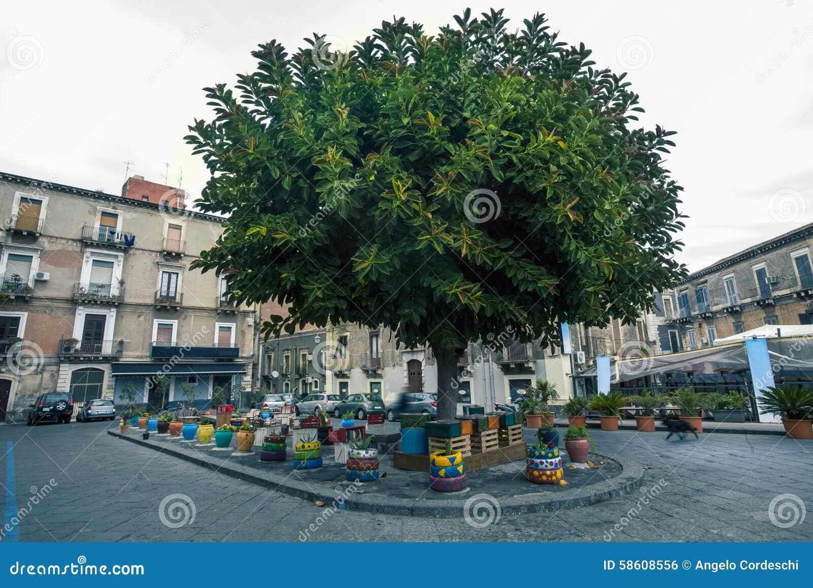 在正方形的美丽的树在卡塔尼亚的中心在西西里岛,意大利