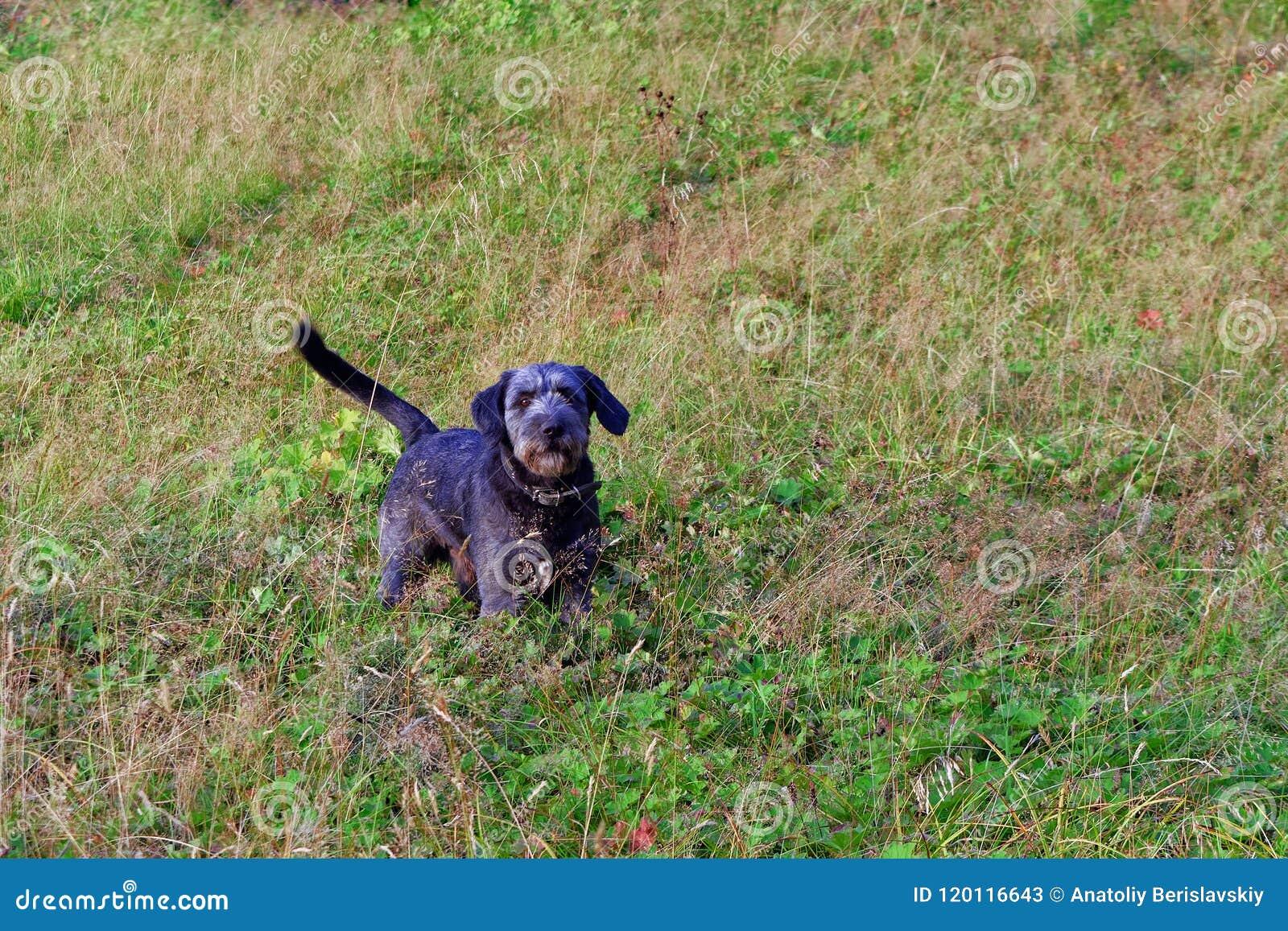 在步行的一条幼小狗在公园