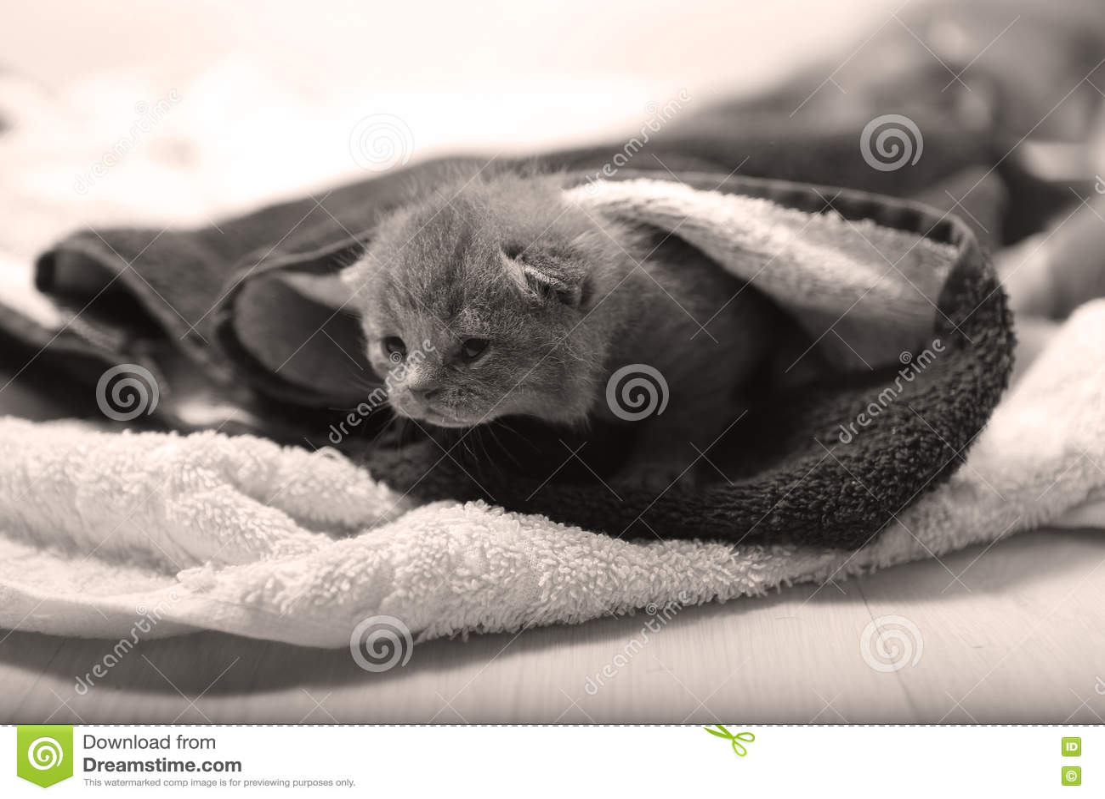 在毛巾下的小小猫