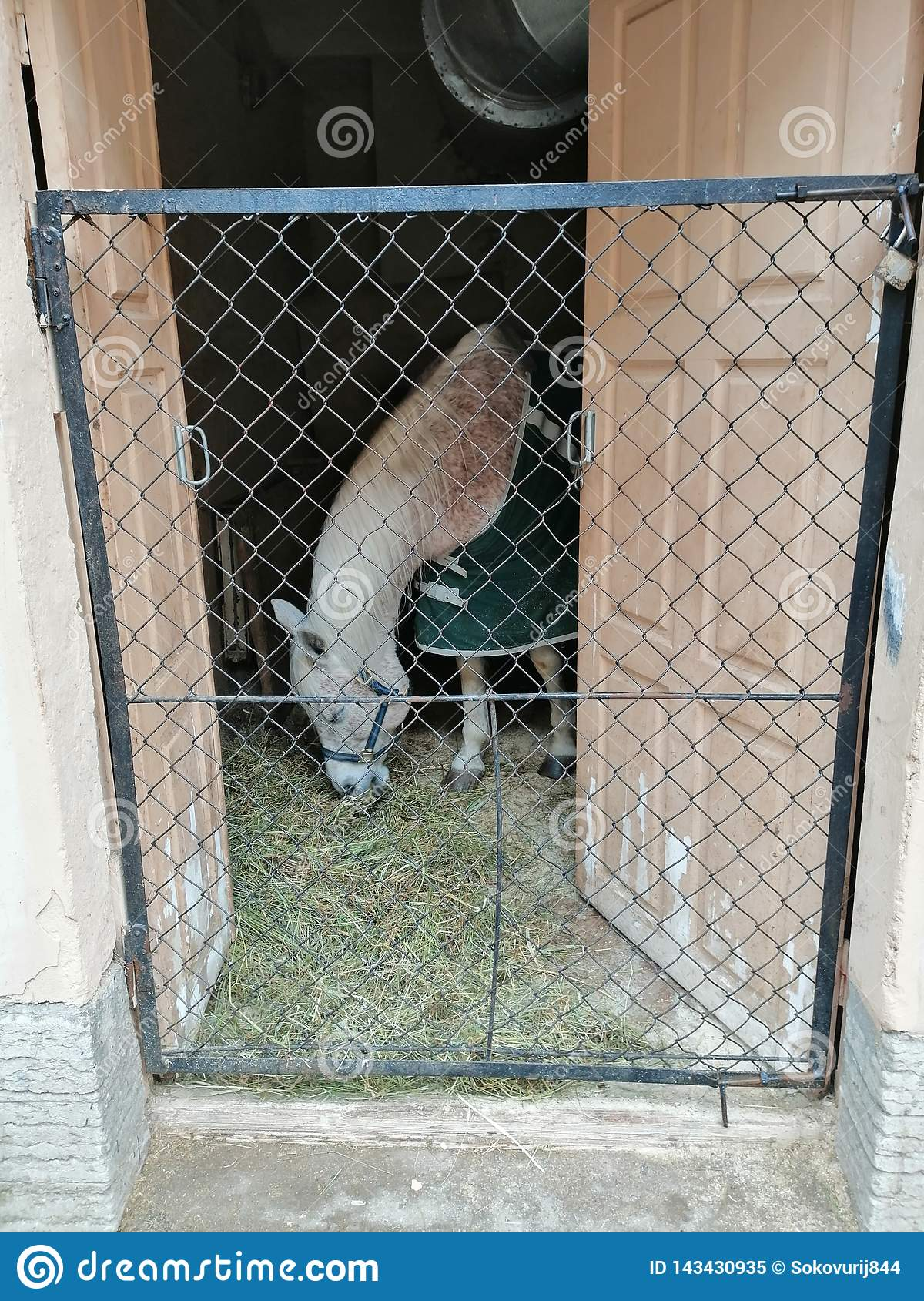 在毯子的马吃干草的