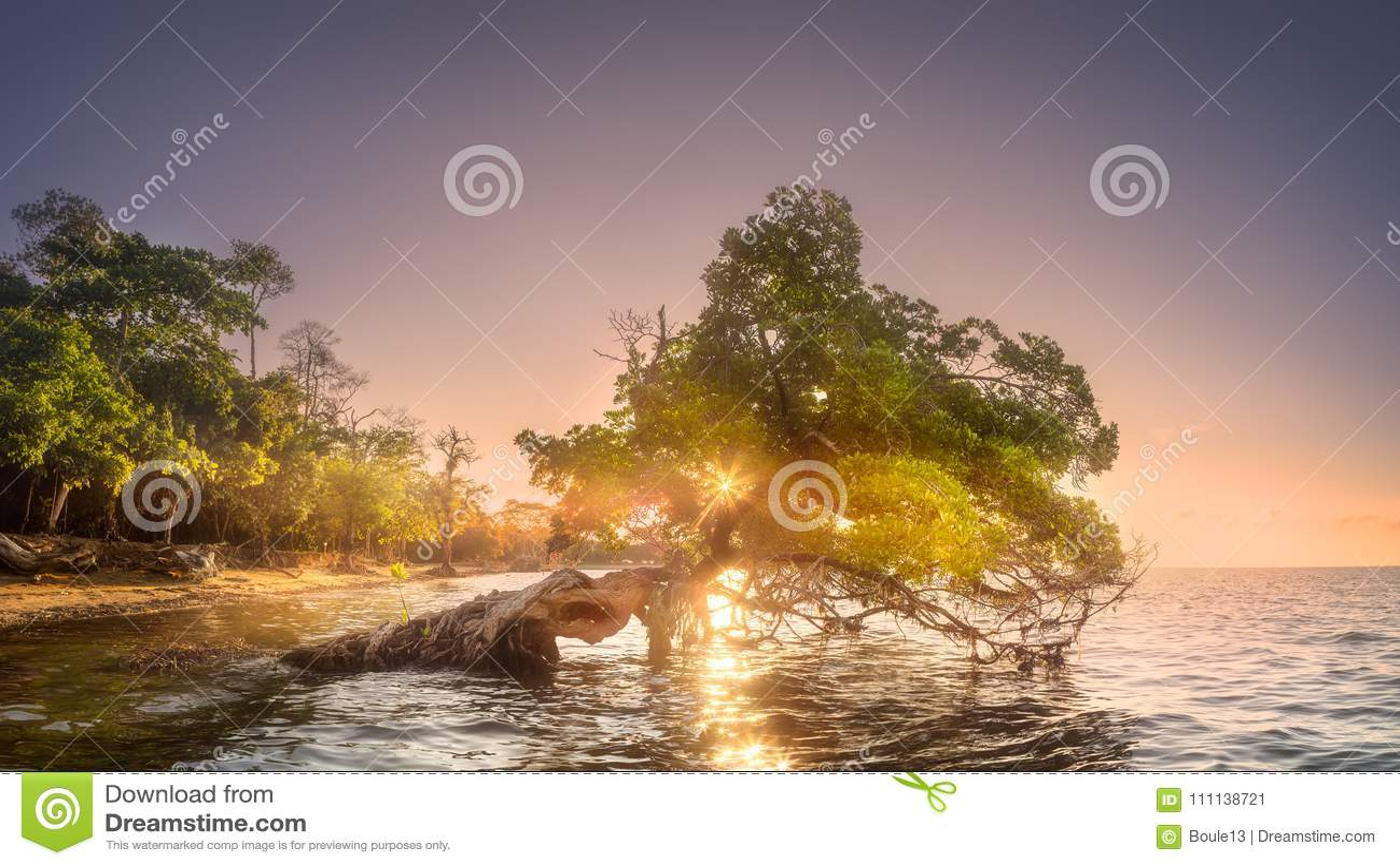 在水下的婆罗洲的树和海岸靠岸
