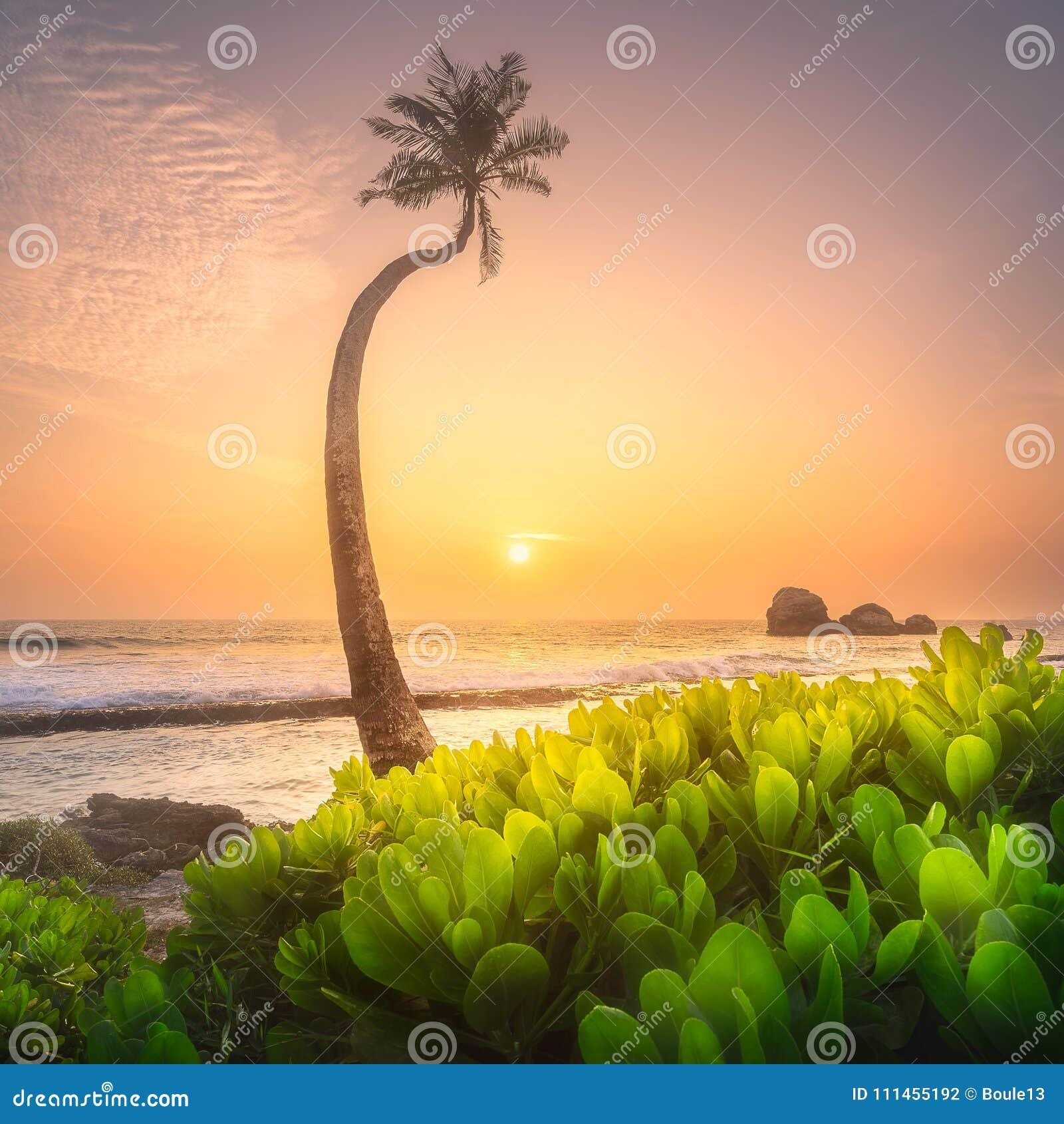 在水下的斯里兰卡的树和海岸靠岸