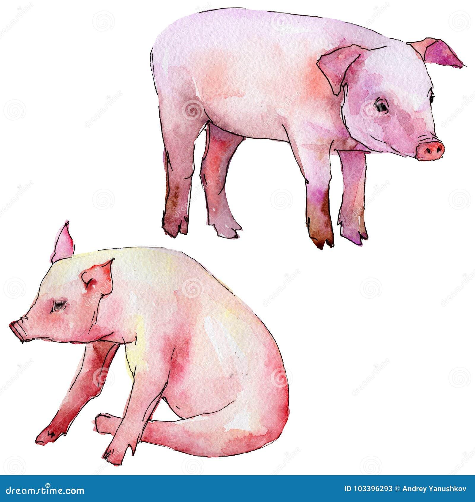 在水彩样式的猪野生动物被隔绝的 库存例证. 插画 有图片