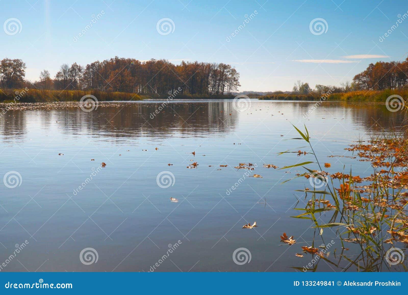 在水的秋叶浮游物 湖或河用安静的水在秋天季节